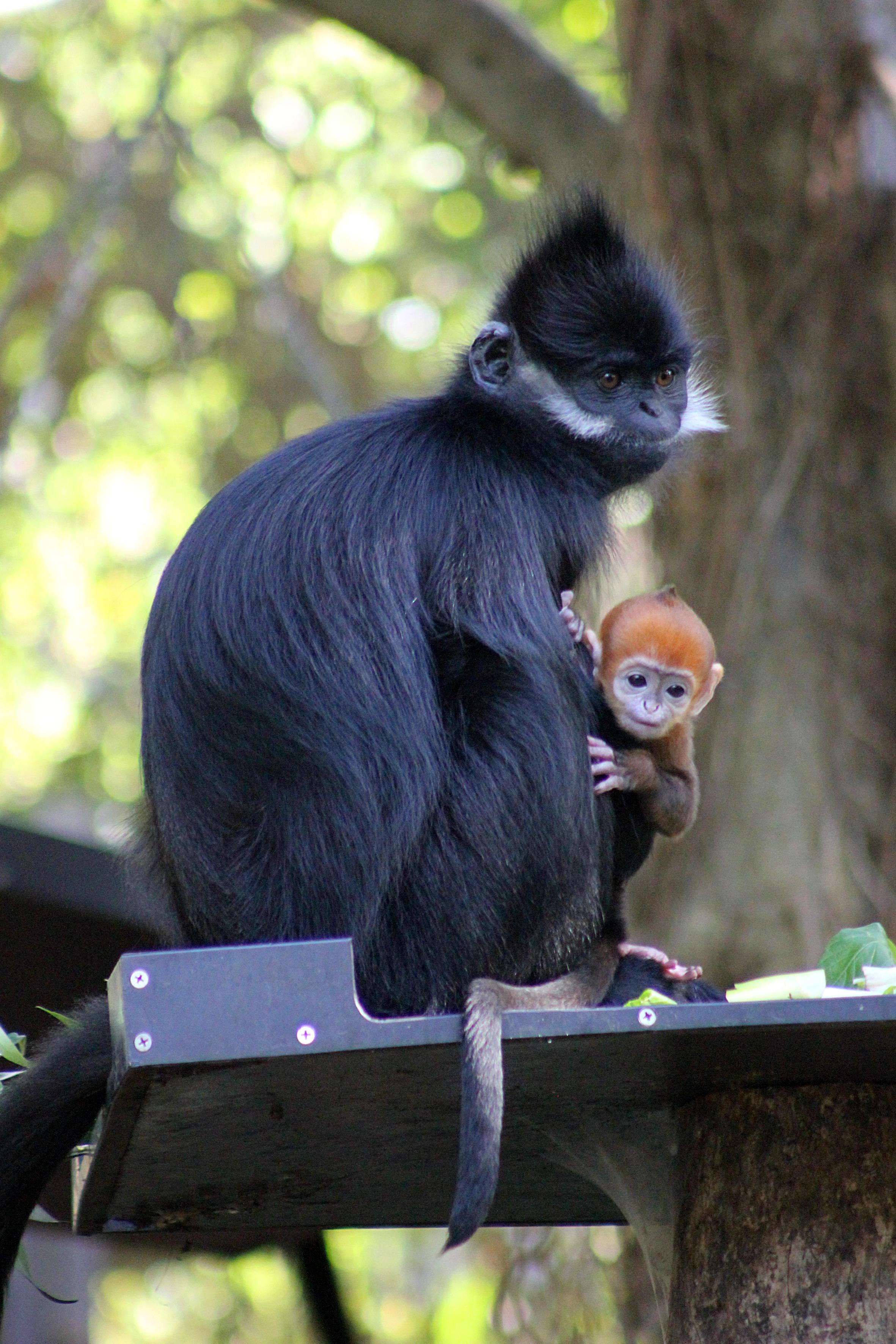 """""""Can I play?"""" (Photo courtesy of the  Taronga Zoo .)"""