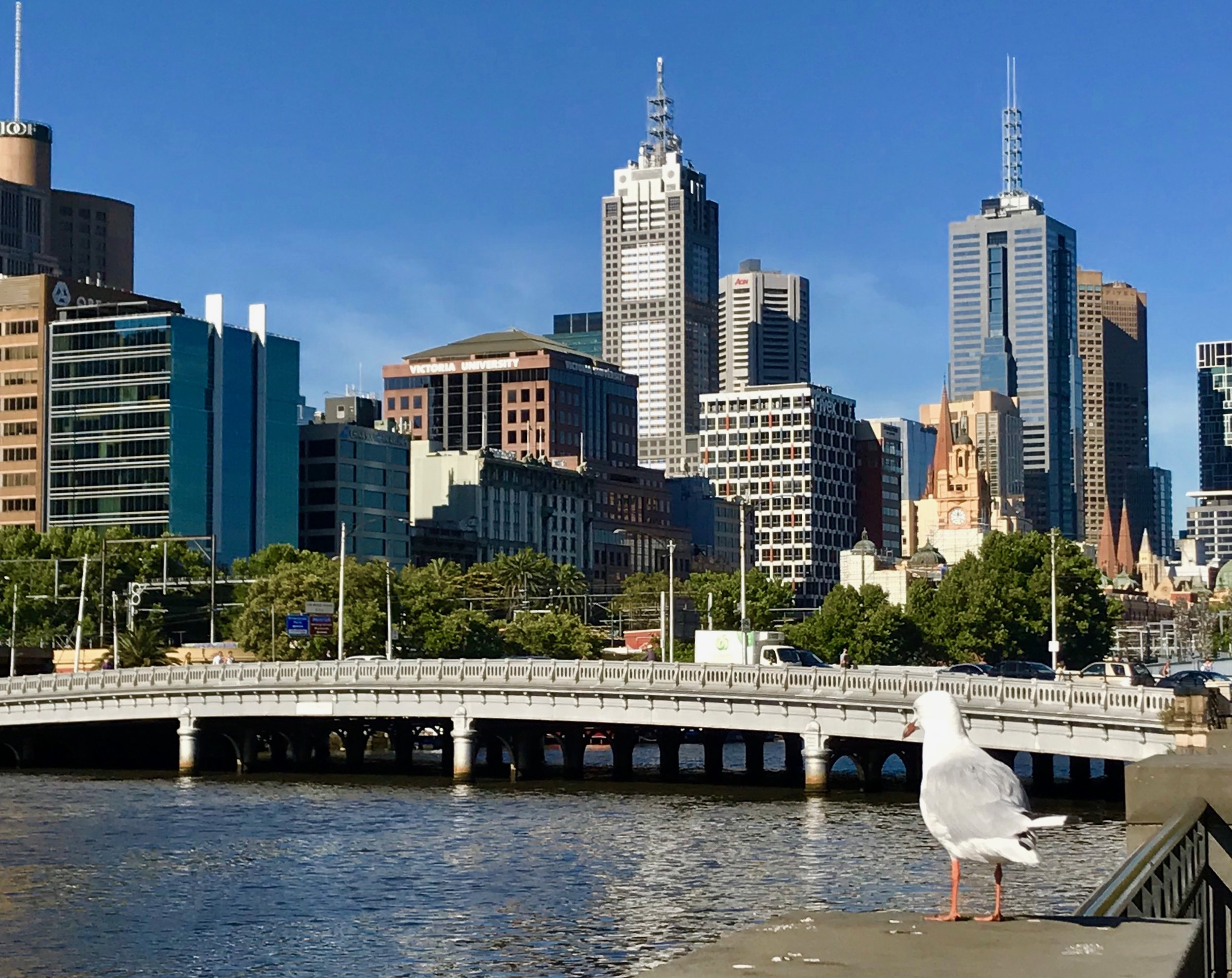 FF_Bird and Melbourne Skyline.jpg