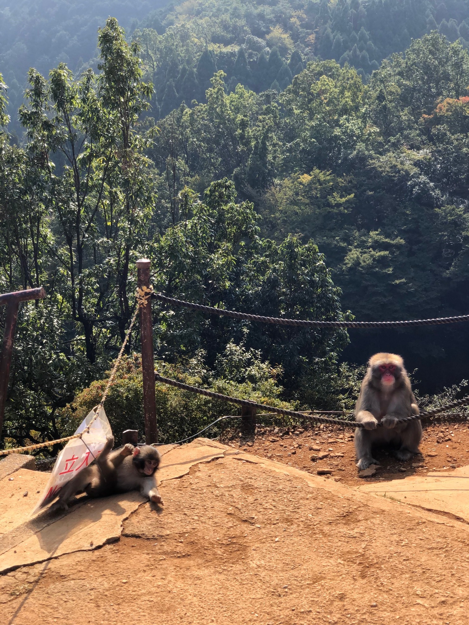 Iwatayama Monkey Park Kyoto.jpeg