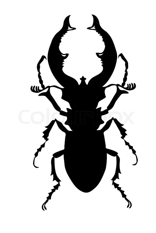 Bug Template Wonder Kids