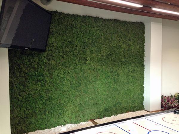 Moss Walls Greenplants Co Uk