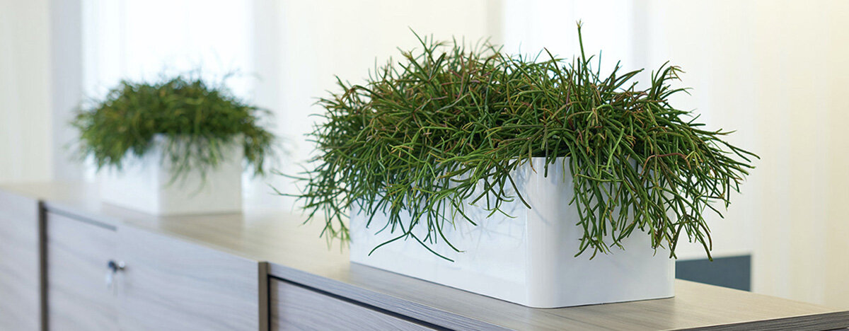 Office Plants To Or Live And