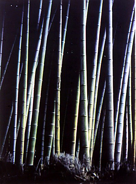 Bamboo Forest cc.jpg