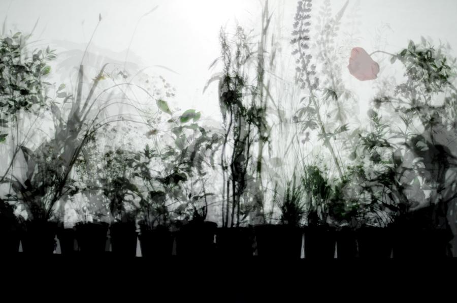 final_plant_shadow_for_slide.jpg
