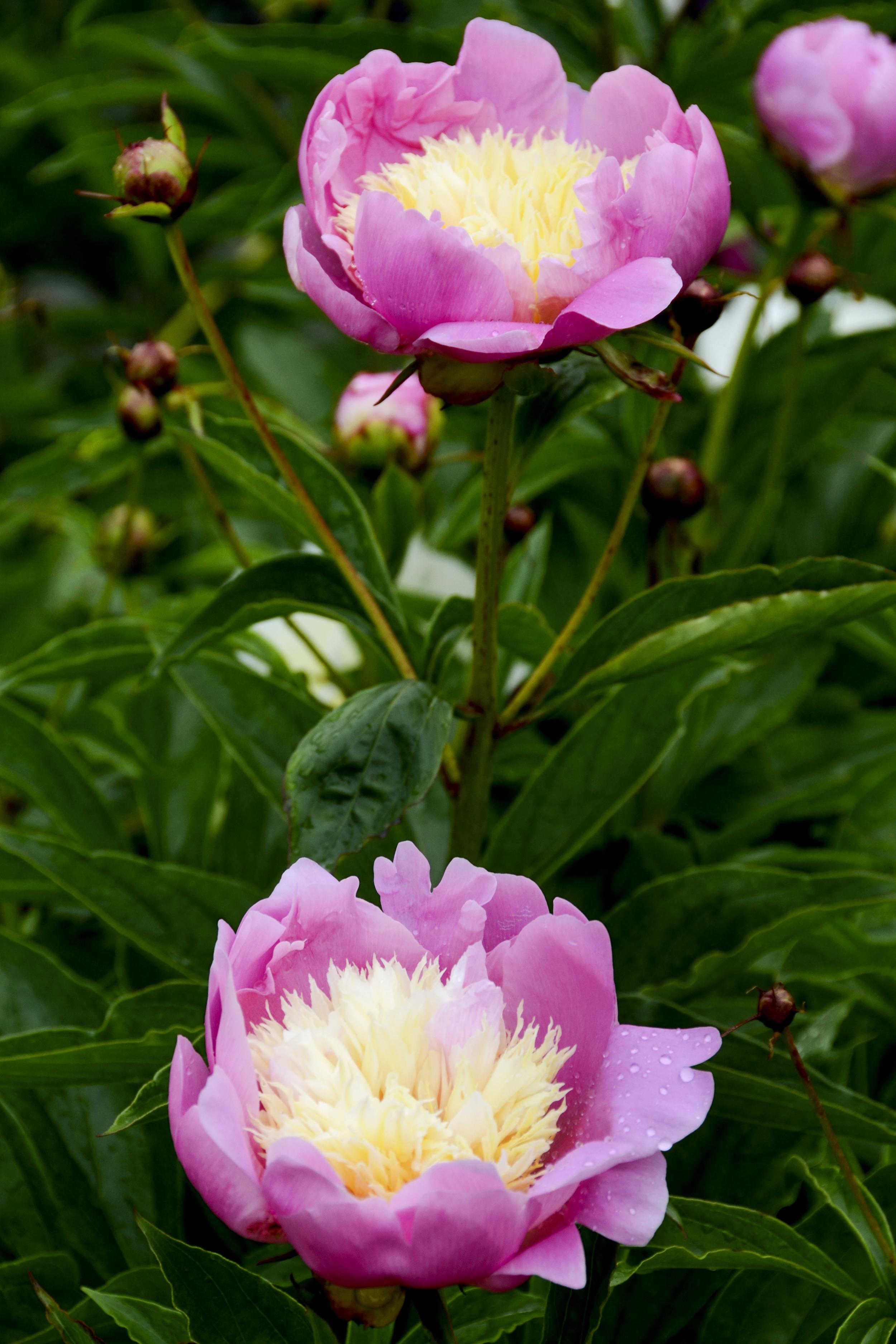 NE_Flowers_005.jpg
