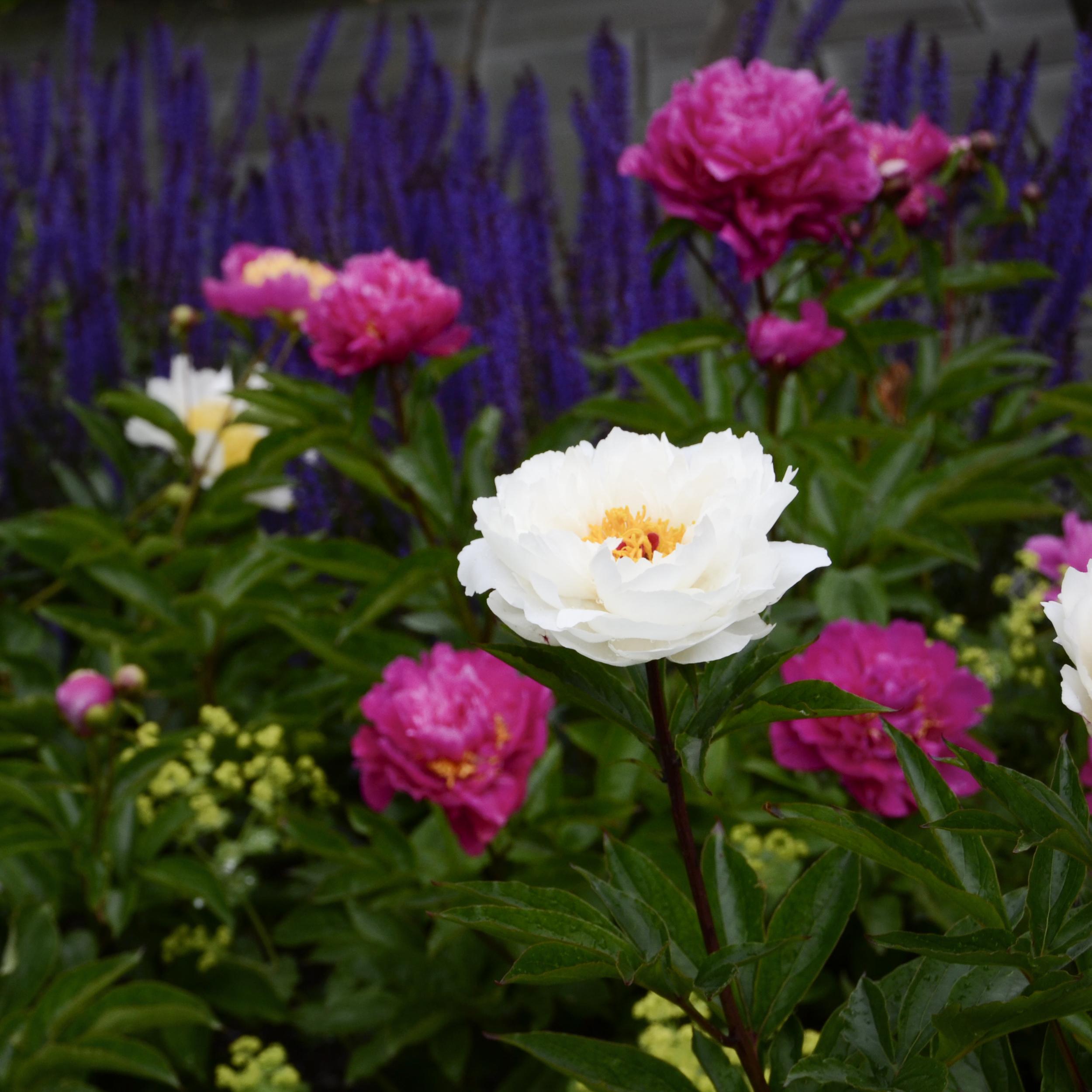 NE_Flowers_007.jpg