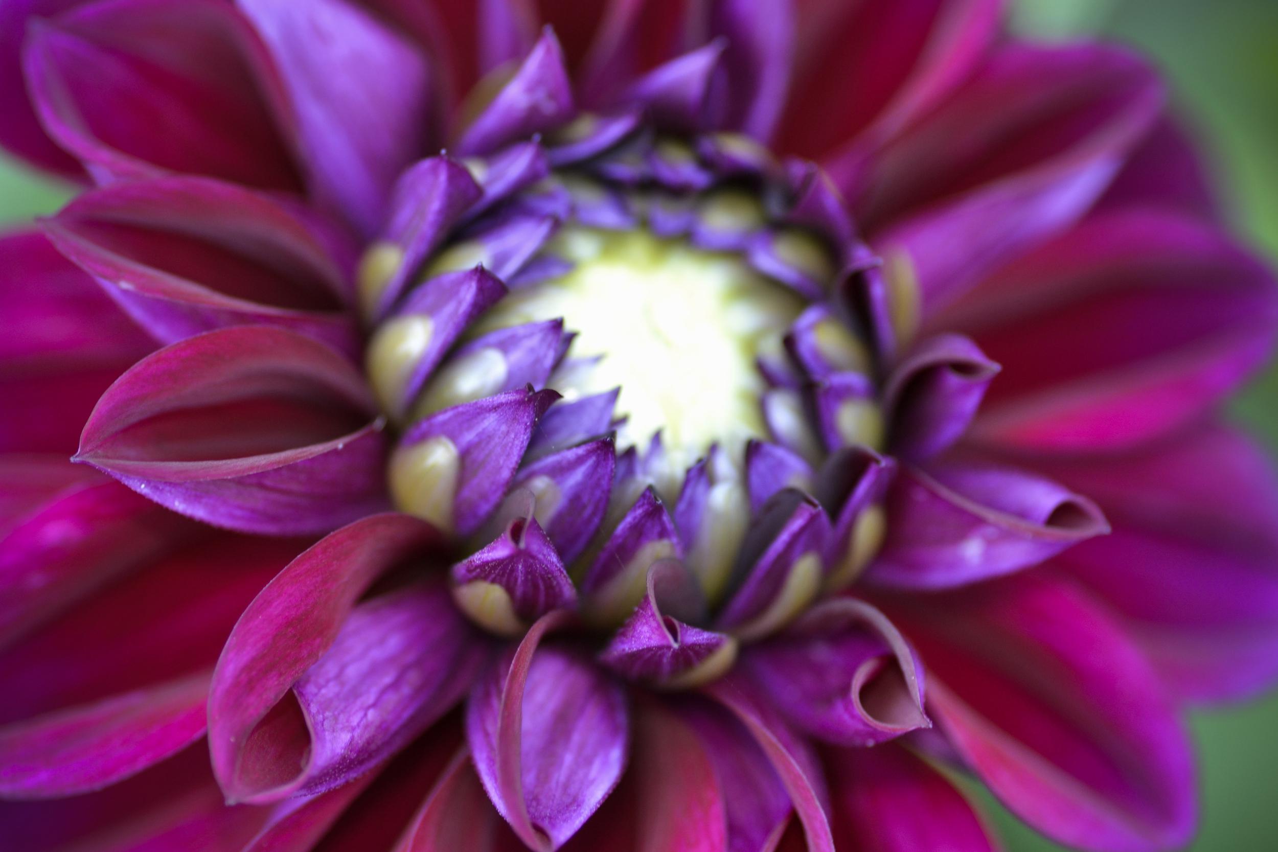 NE_Flowers_010.jpg