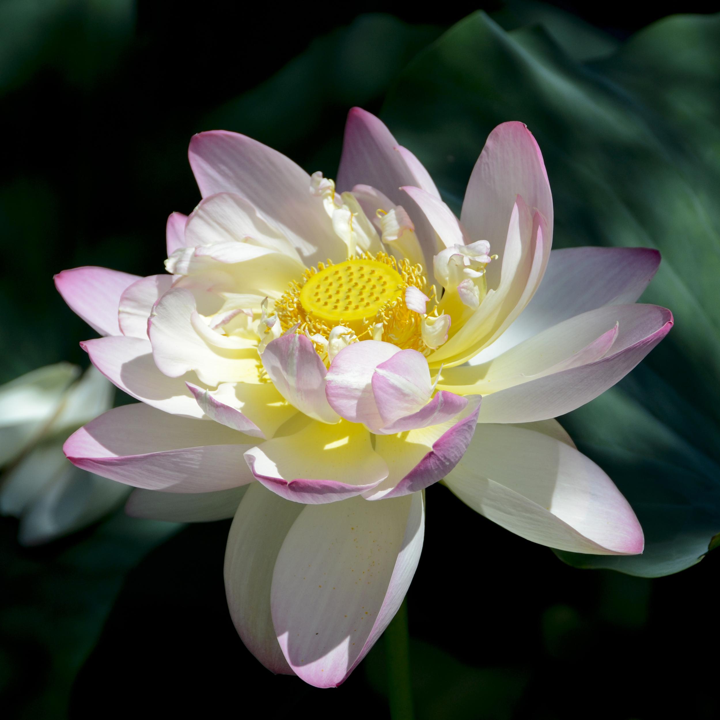 NE_Flowers_022.jpg
