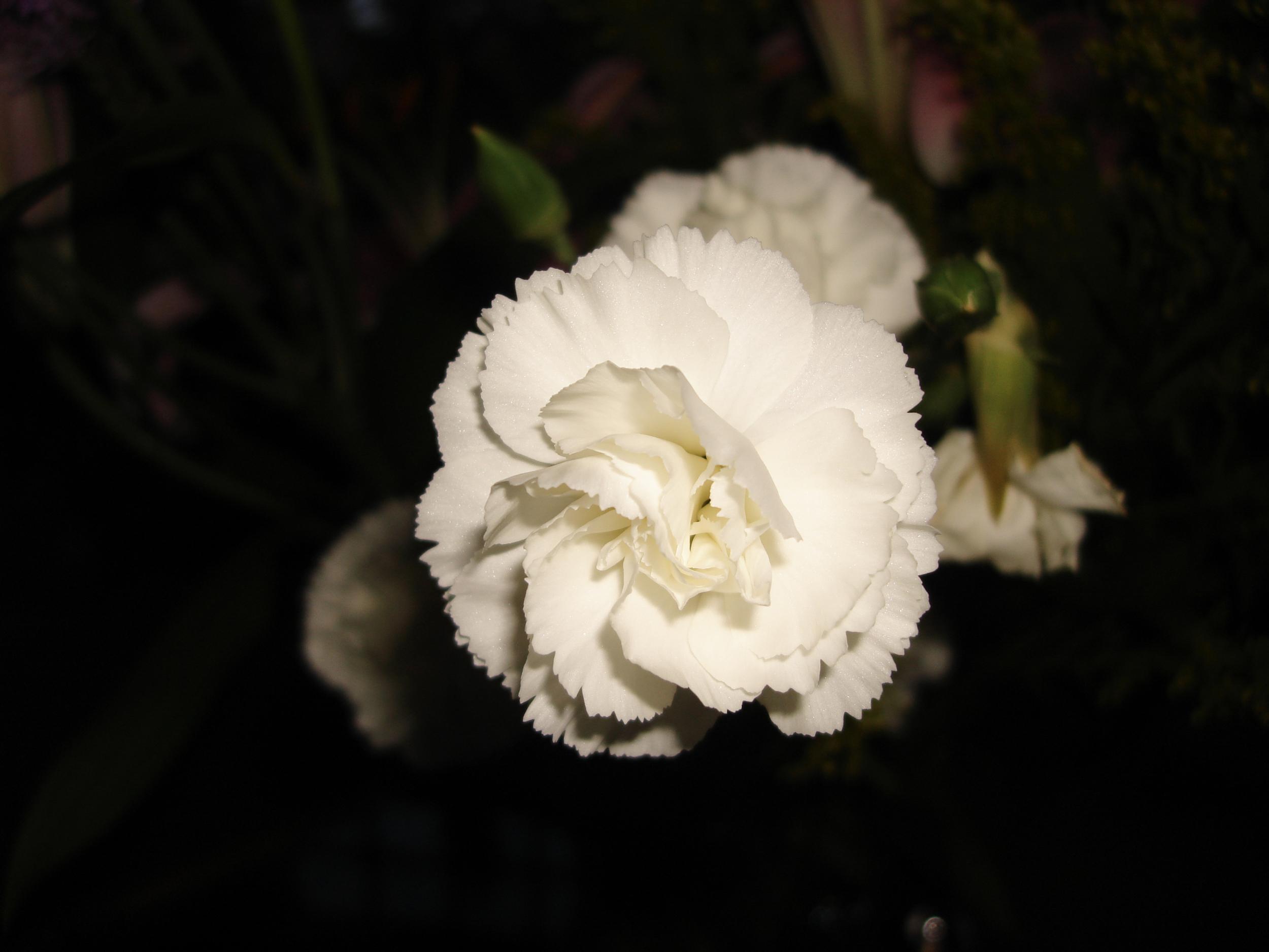 NE_Flowers_032.jpg