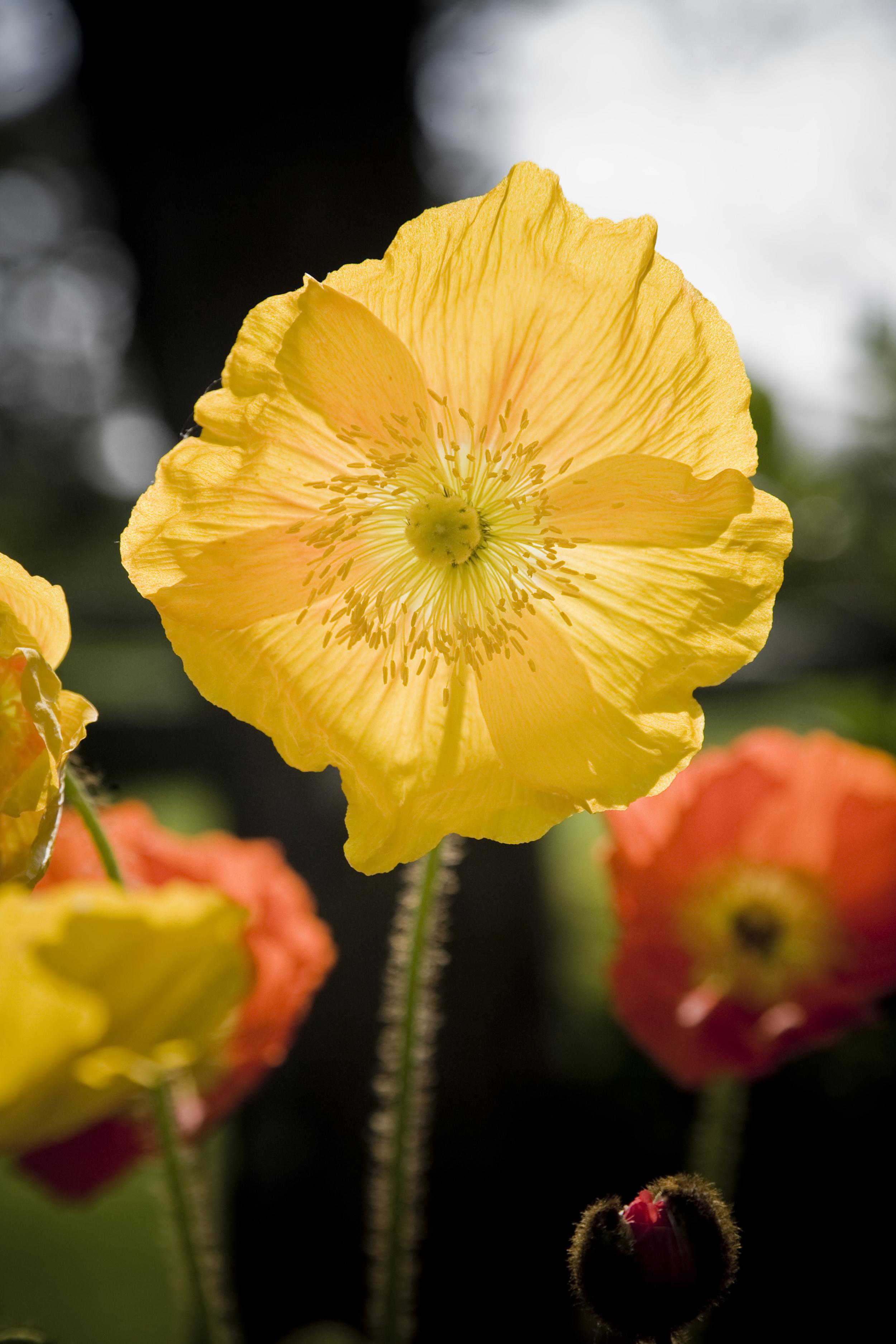NE_Flowers_033.jpg
