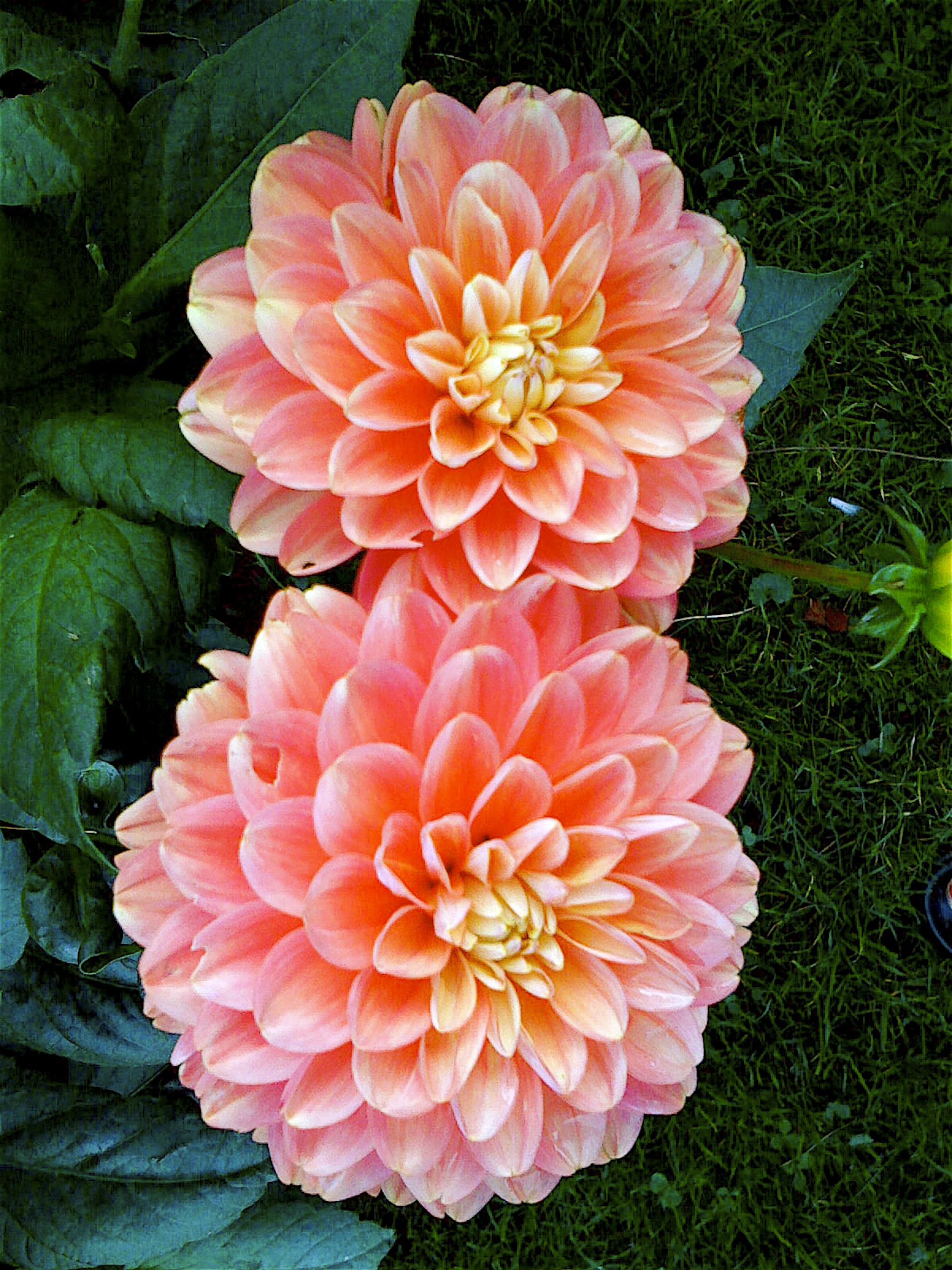 NE_Flowers_037.jpg