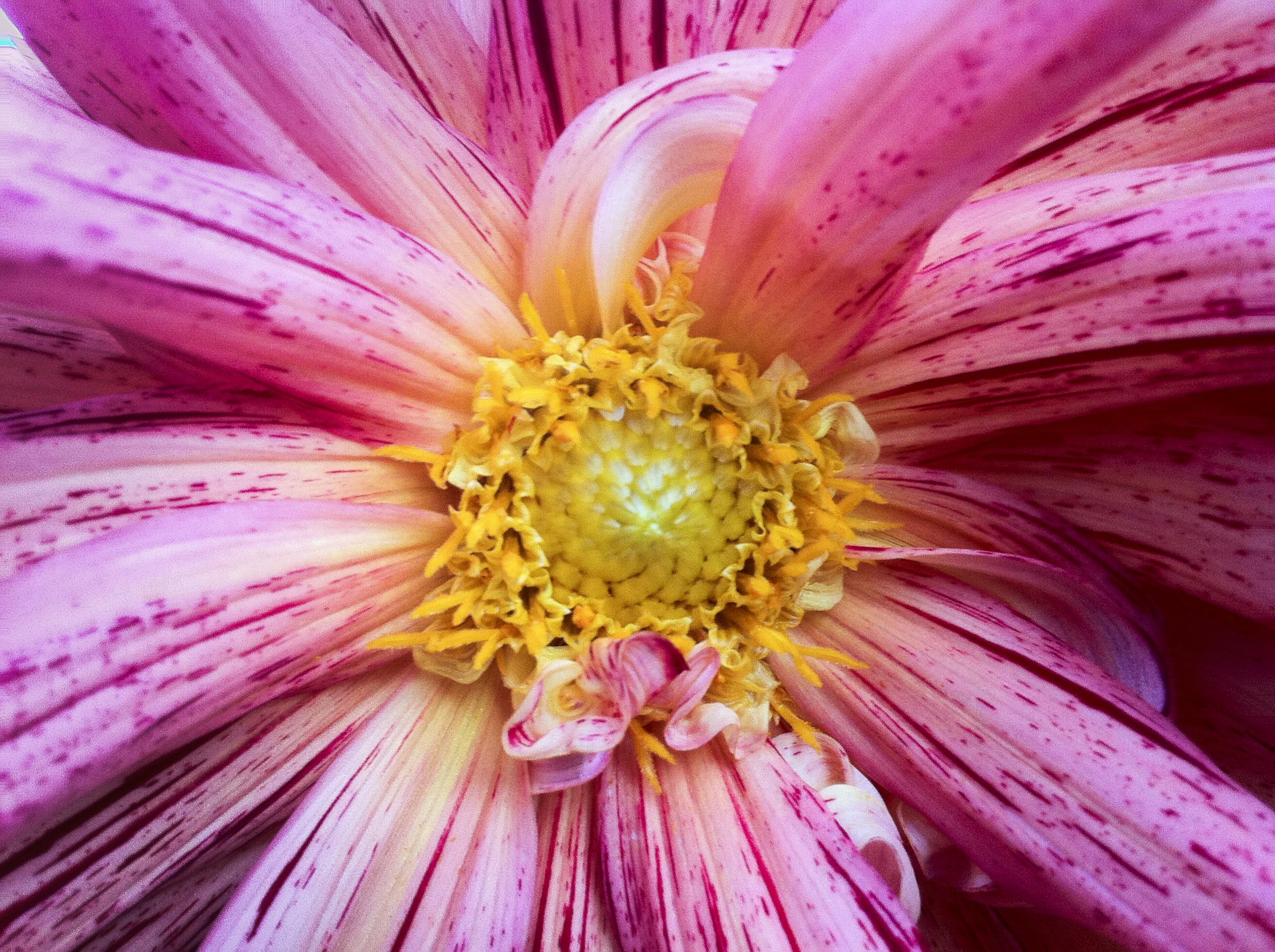 NE_Flowers_039.jpg