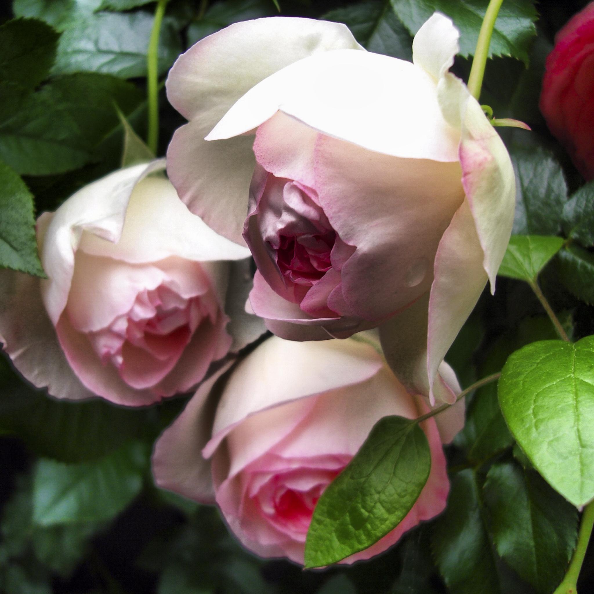 NE_Flowers_045.jpg