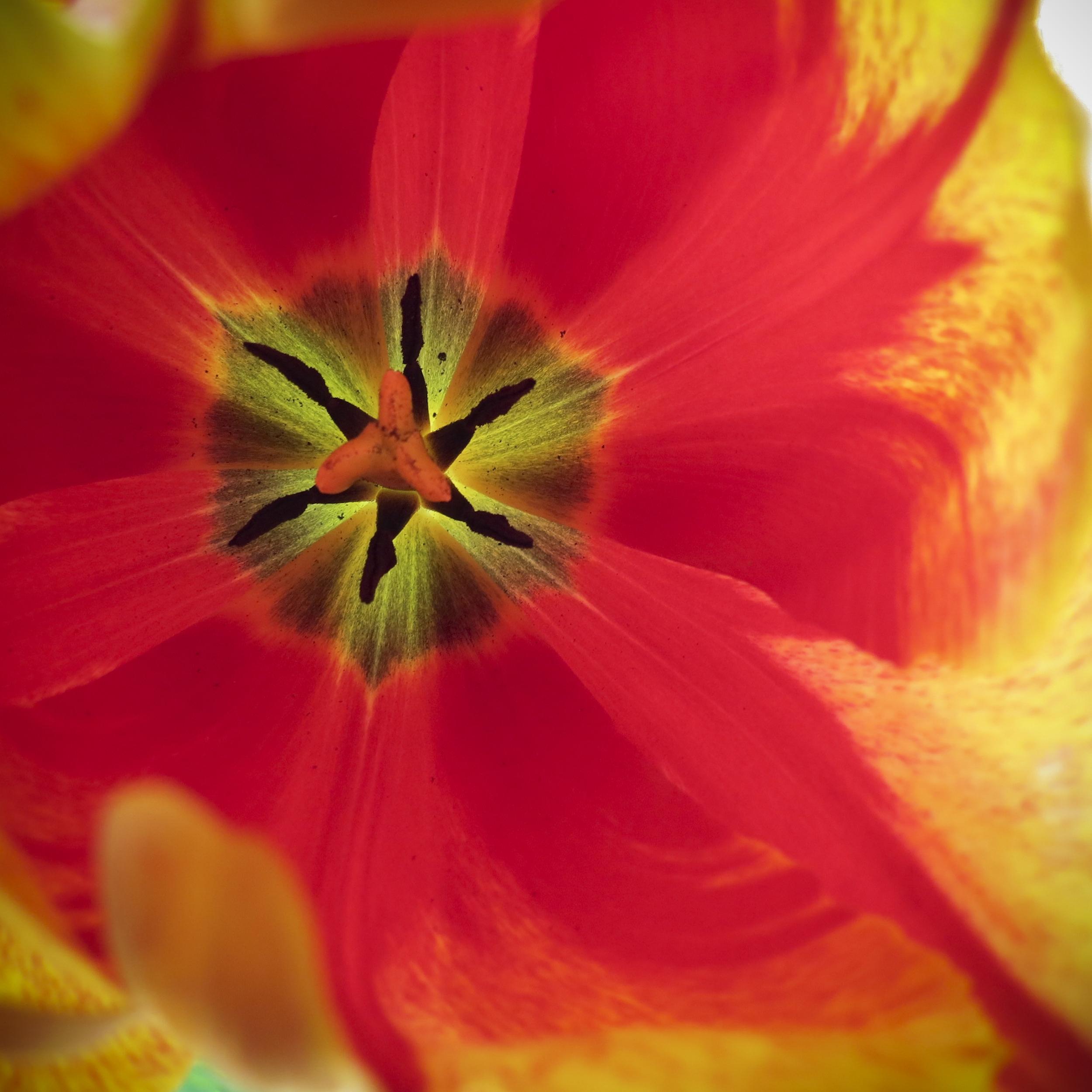 NE_Flowers_057.jpg