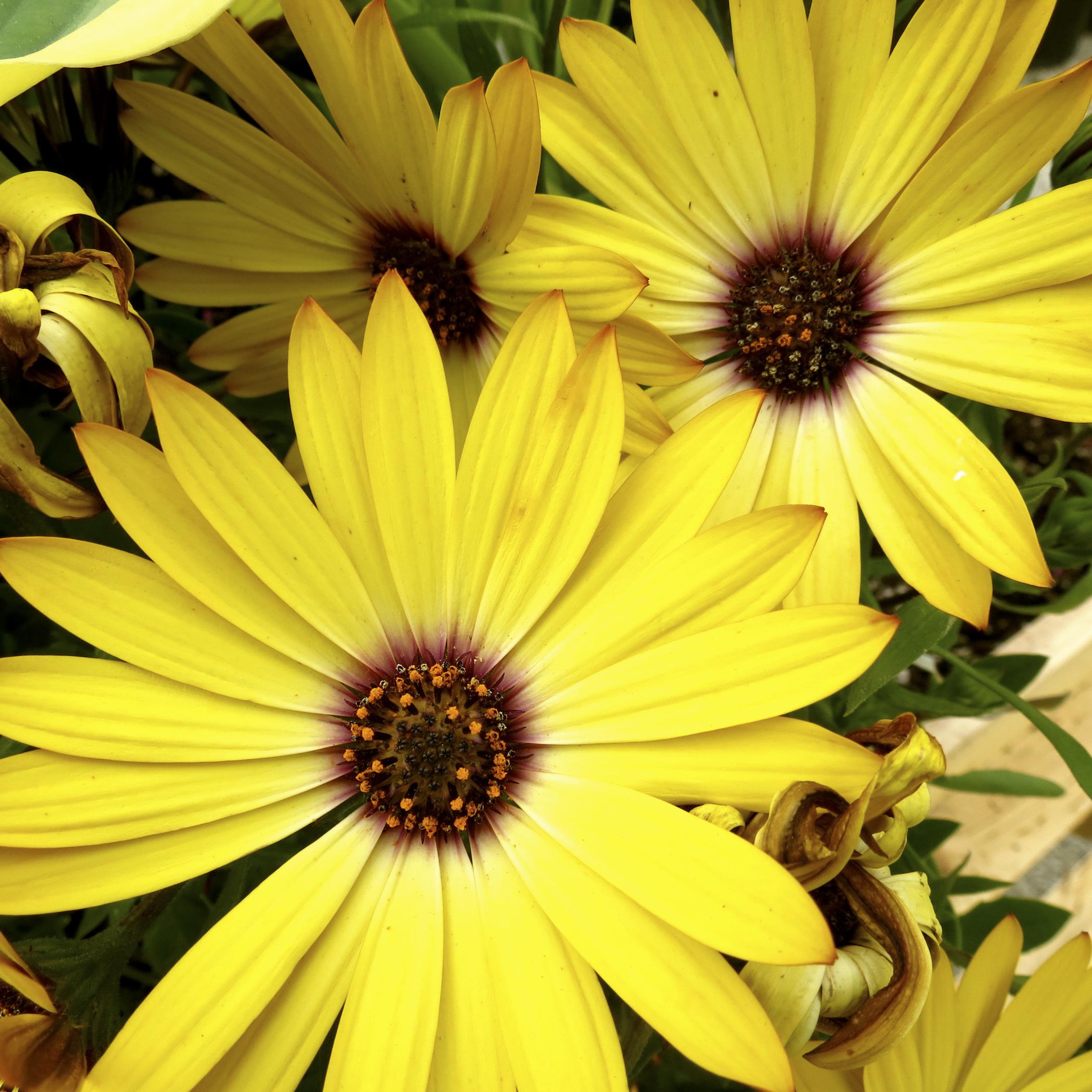 NE_Flowers_060.jpg