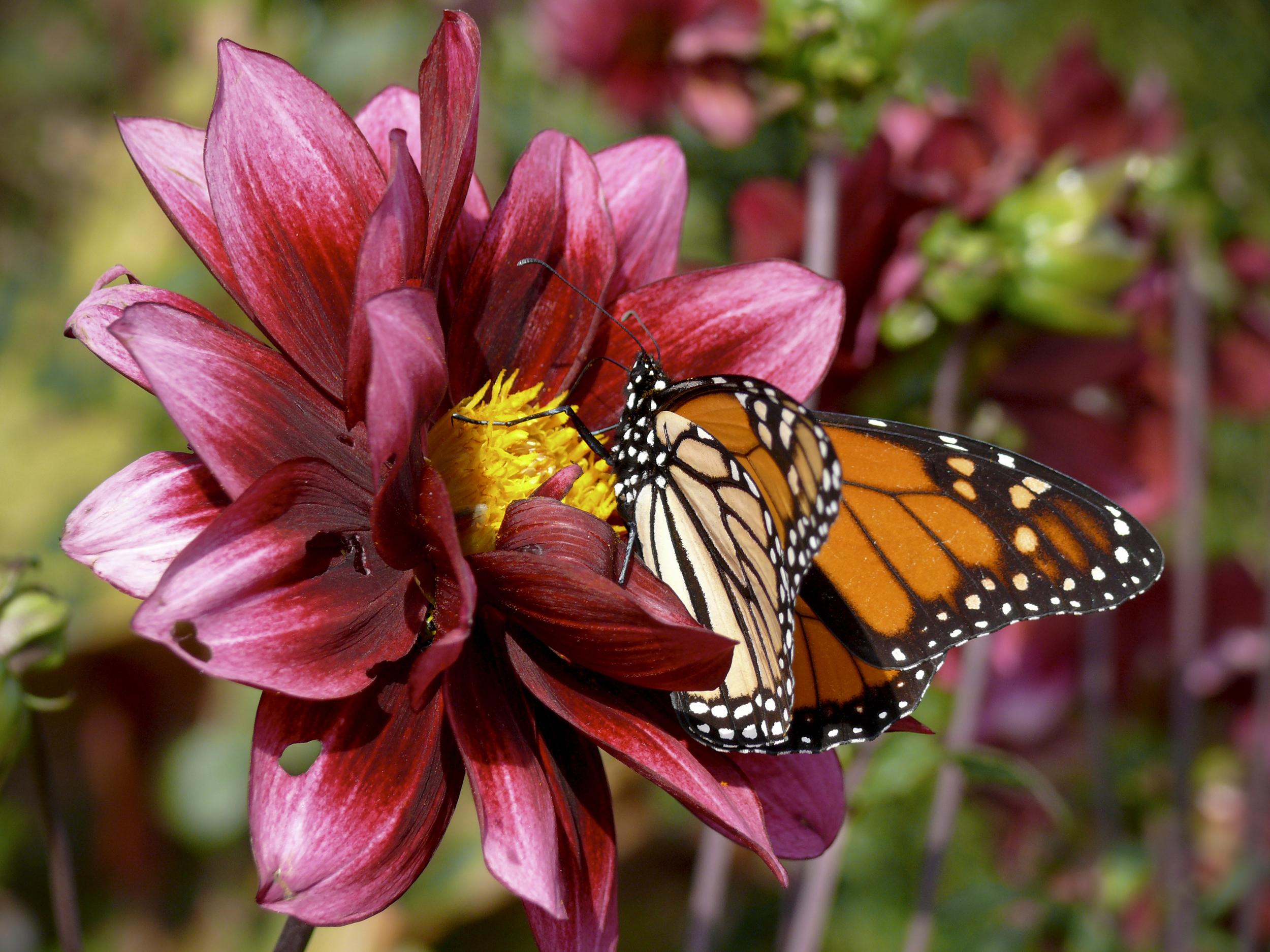 NE_Flowers_077.jpg