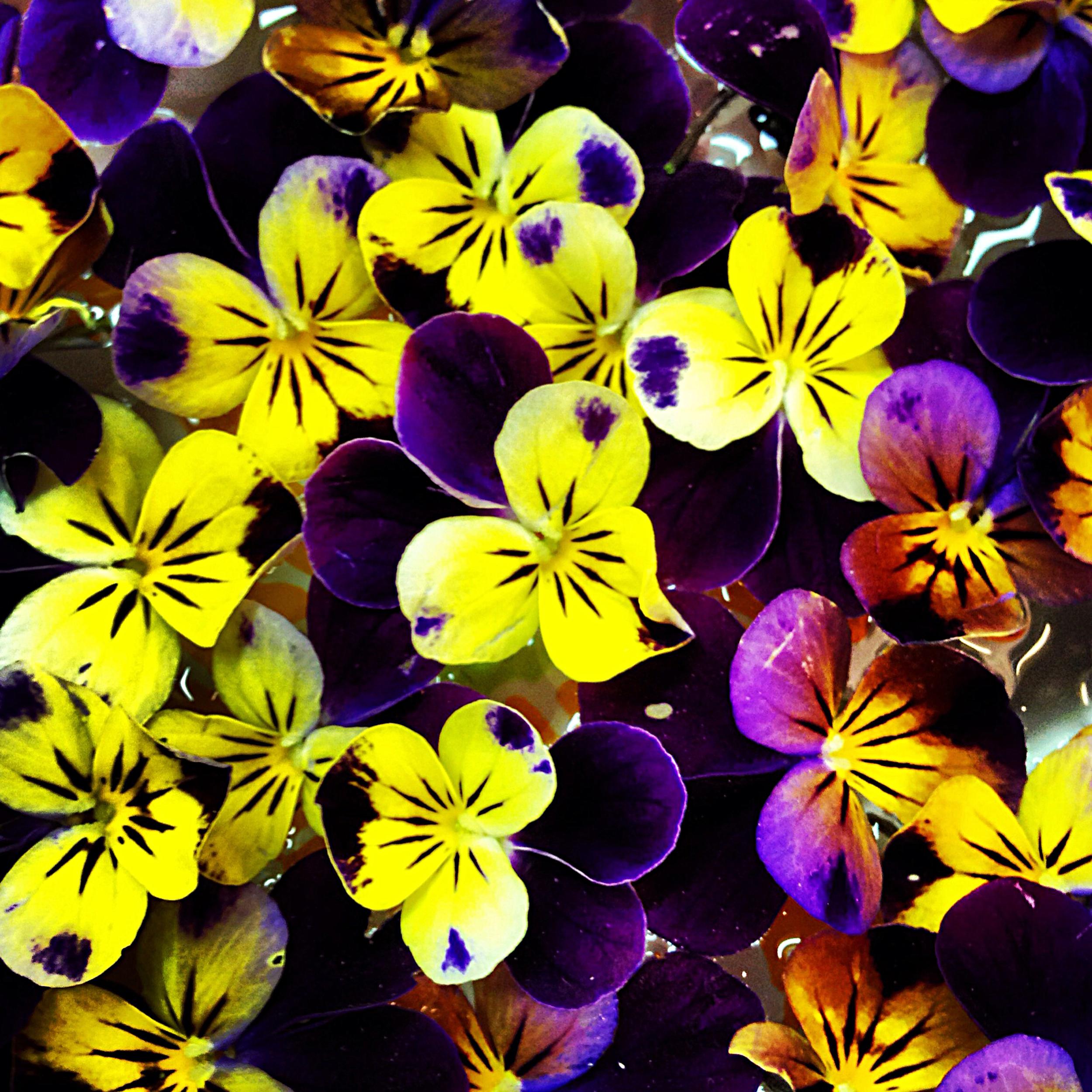NE_Flowers_082.jpg