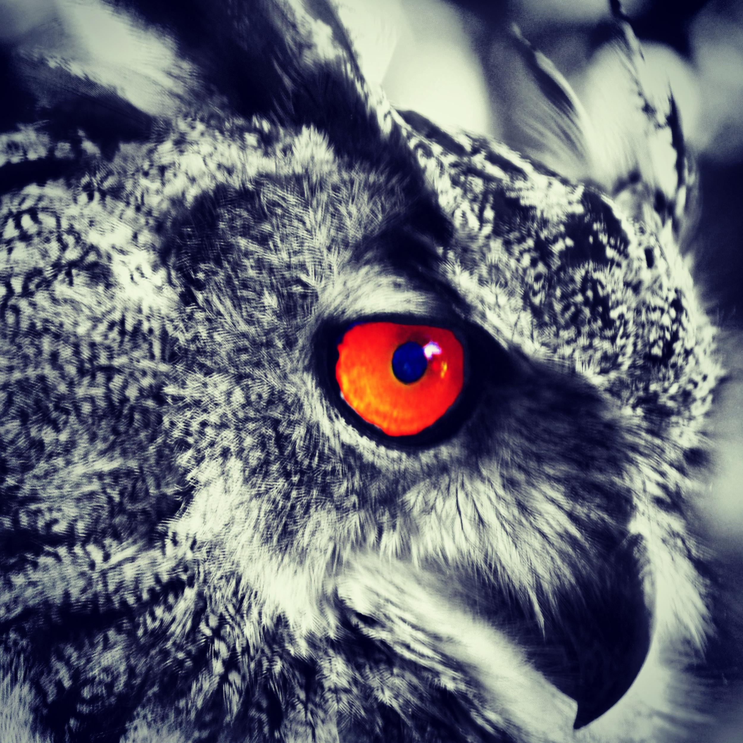 NE_Wildlife_181.jpg