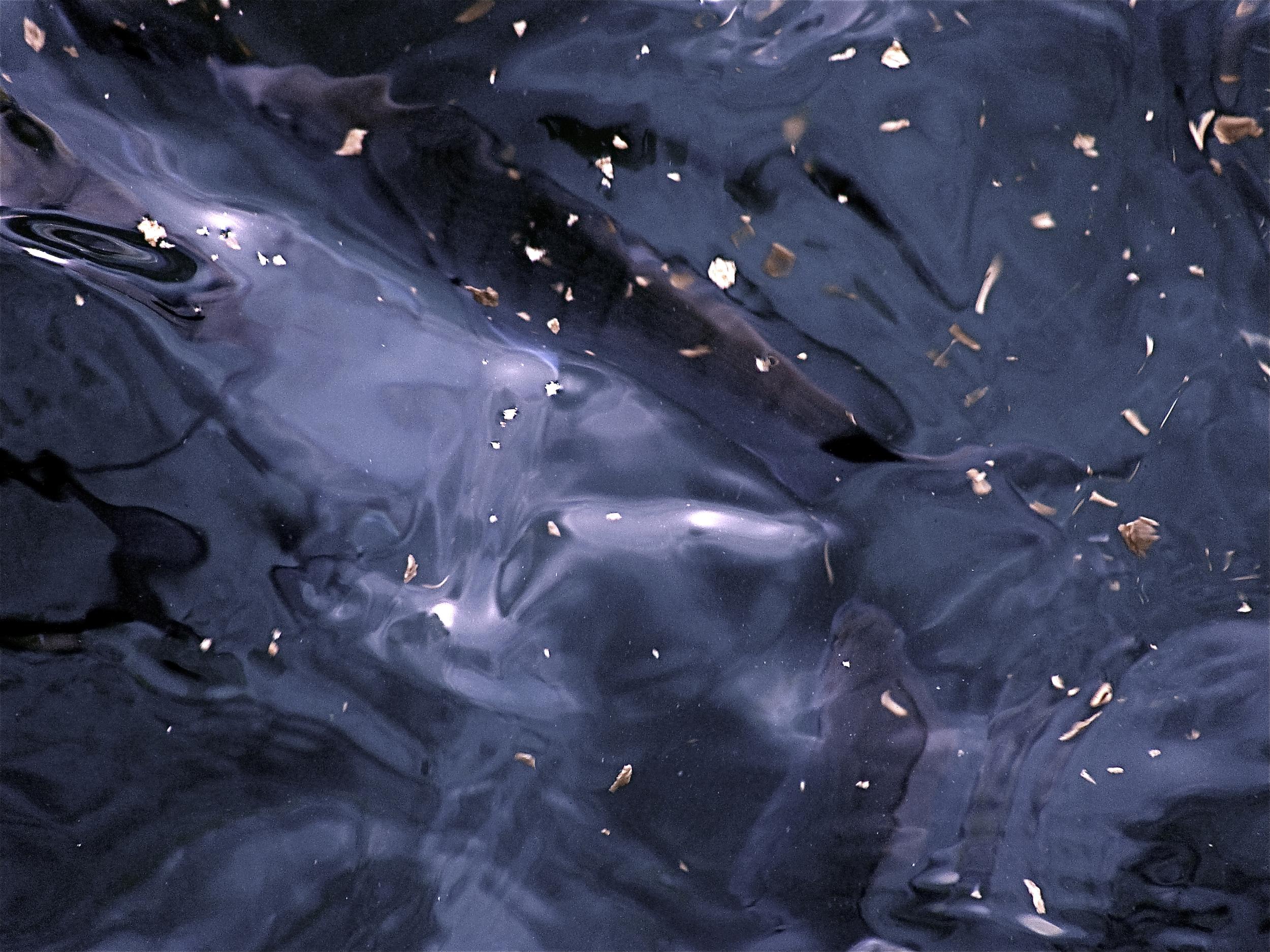 NE_Water_017.jpg