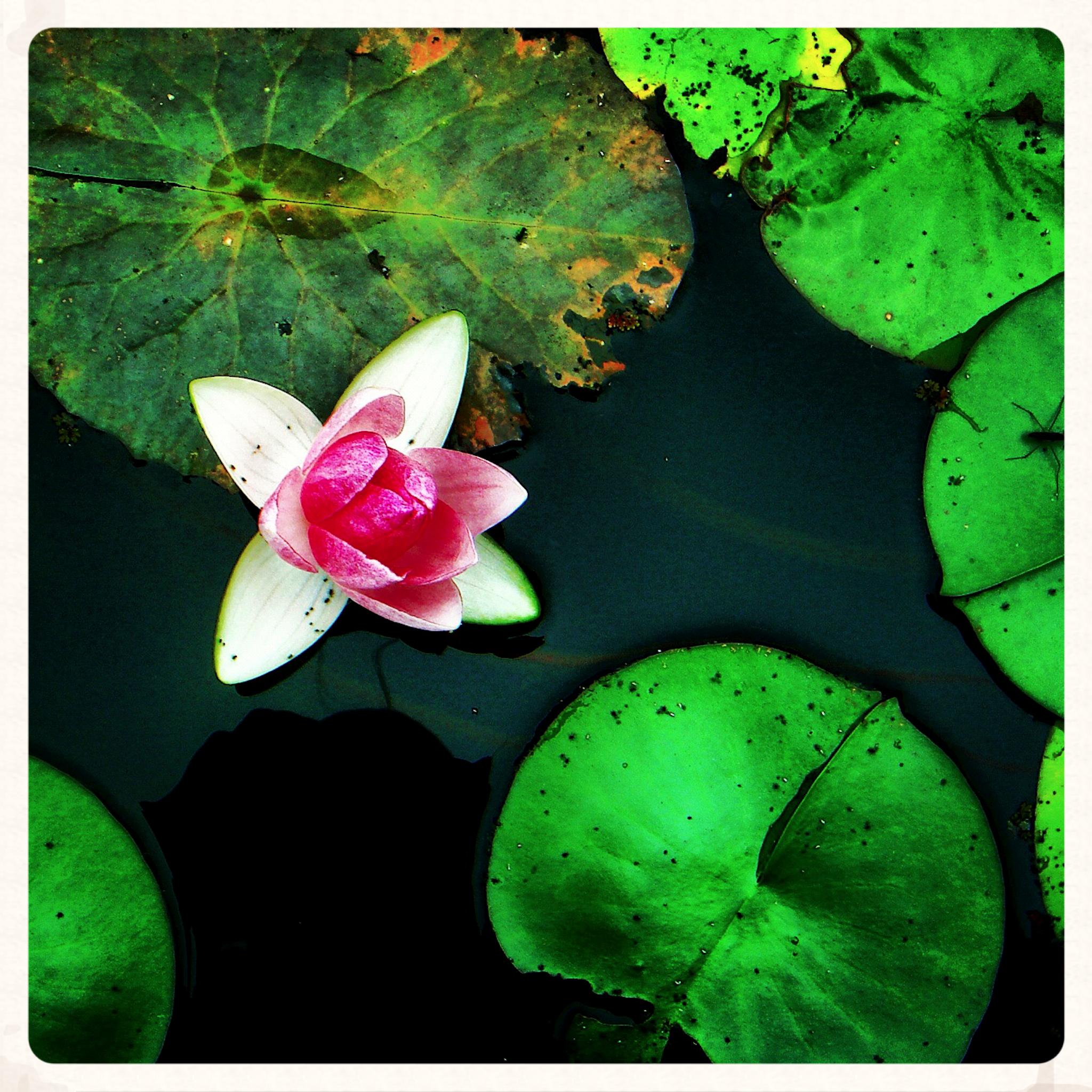 NE_Flowers_044.jpg