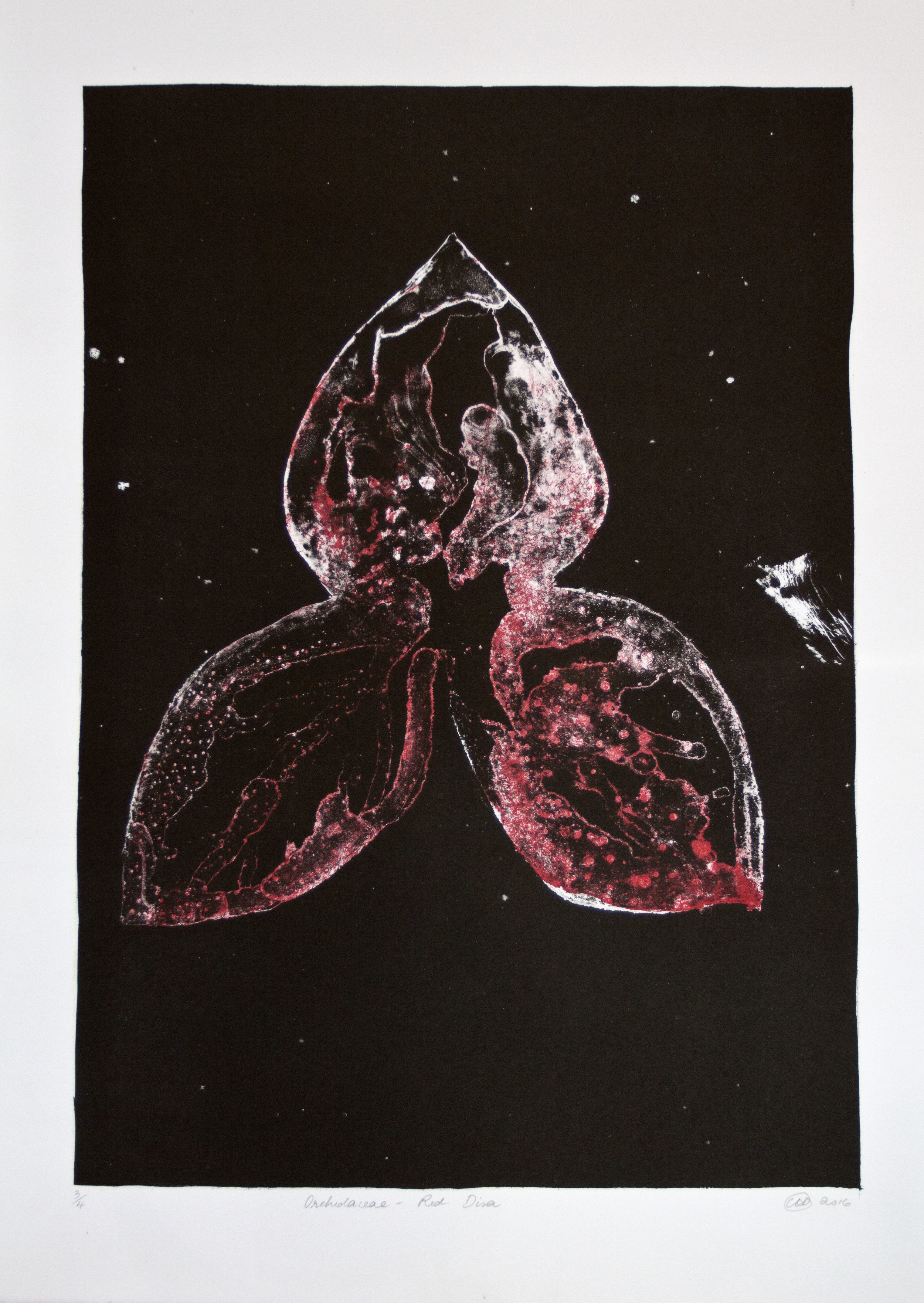 Orchidaceae - Red Disa   Lithograph. 2016  56 x 40cm  $850 (F)  $600 (UF)