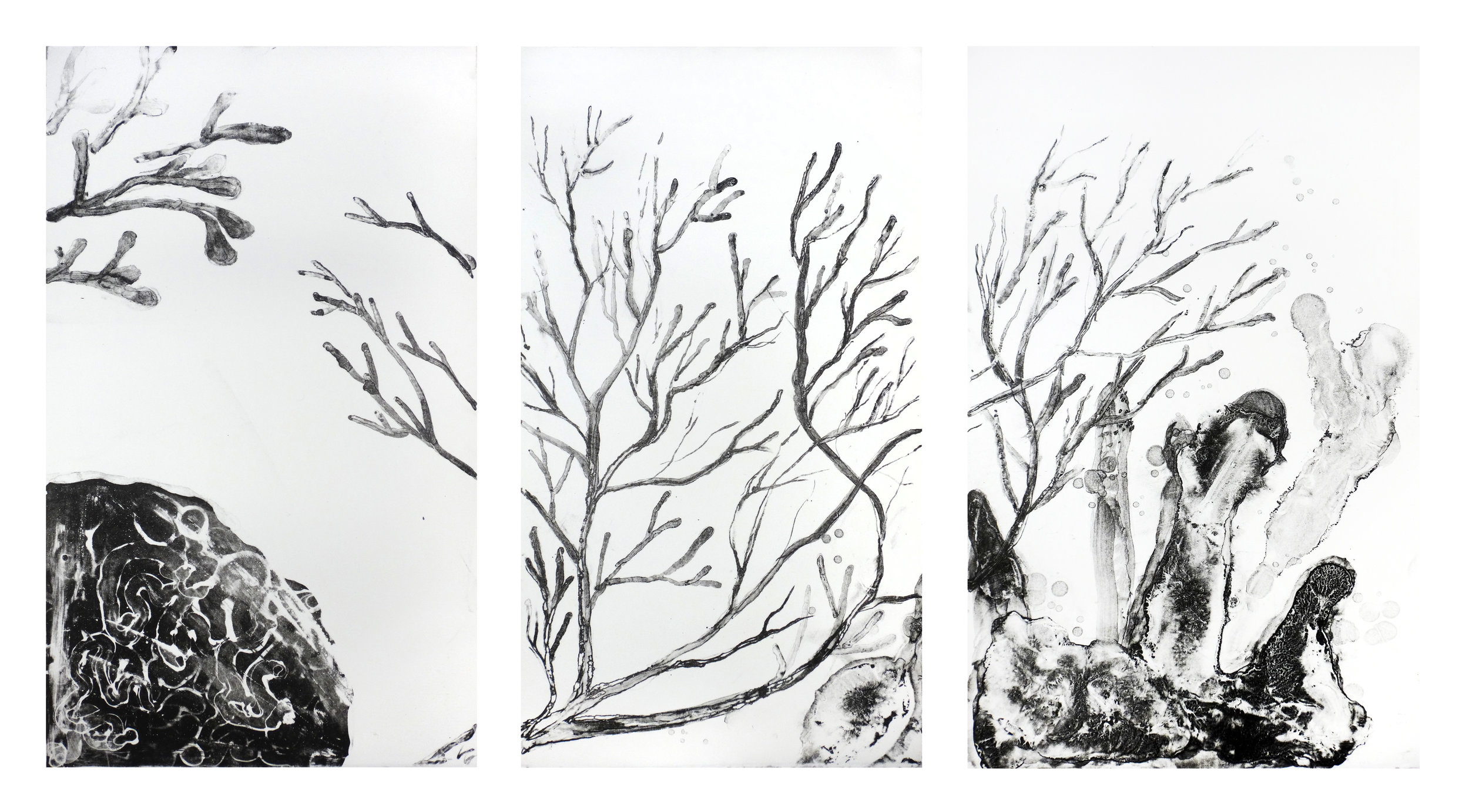 Bommie — Gorgonian (Sea Fan)   35 x 67cm (tryptich)  Polyplate lithograph