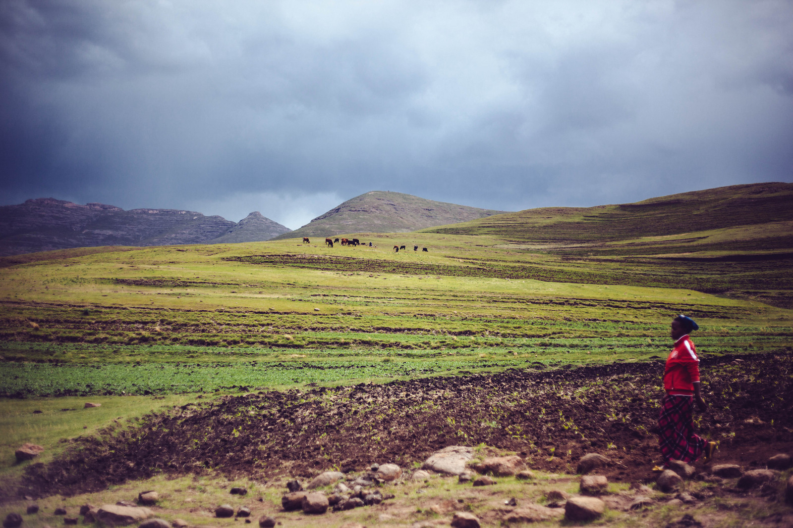 green landscape.jpg