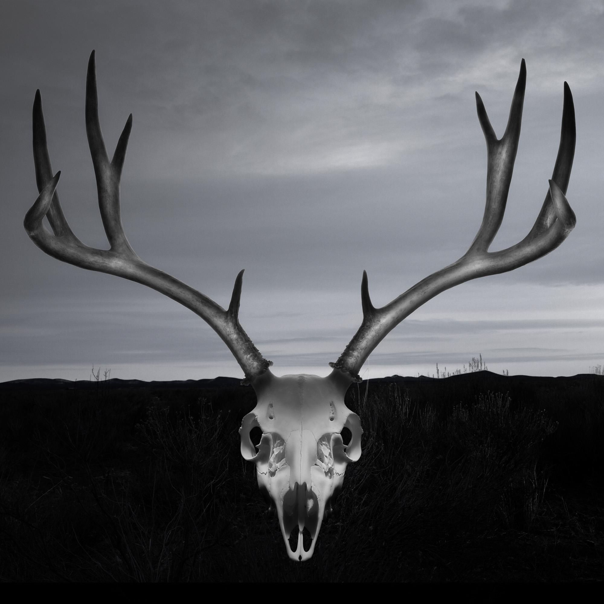 Buck_Skull_0009a.jpg