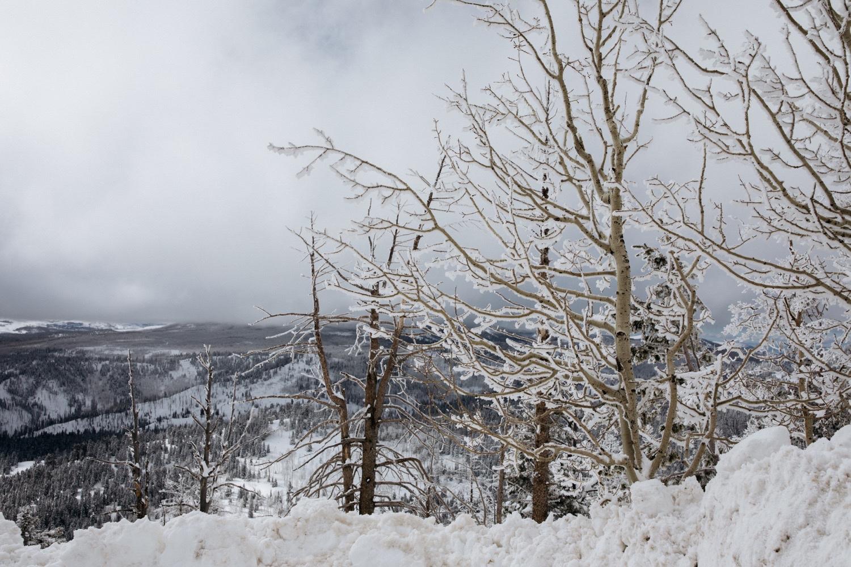 04_winter_desert_snow_zoeburchardstudio_utah_zoeburchard_elopement_redrocks_elopementphotographer.jpg