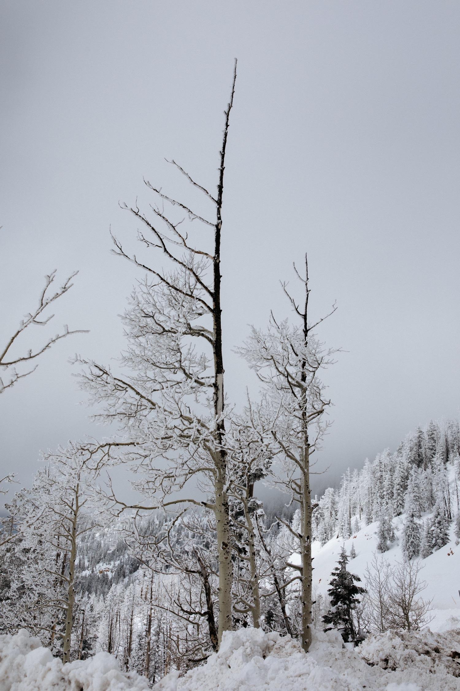 09_winter_desert_snow_zoeburchardstudio_utah_zoeburchard_elopement_redrocks_elopementphotographer.jpg