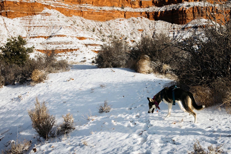 29_winter_desert_snow_zoeburchardstudio_utah_zoeburchard_elopement_redrocks_elopementphotographer.jpg
