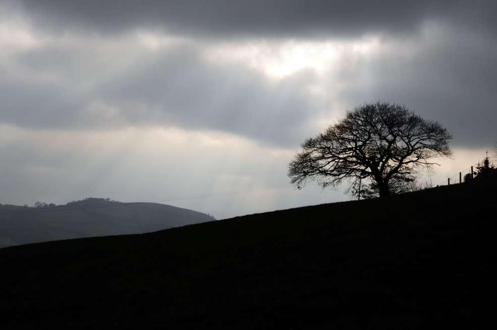 Wales-oak-tree-silhouette-1.jpg