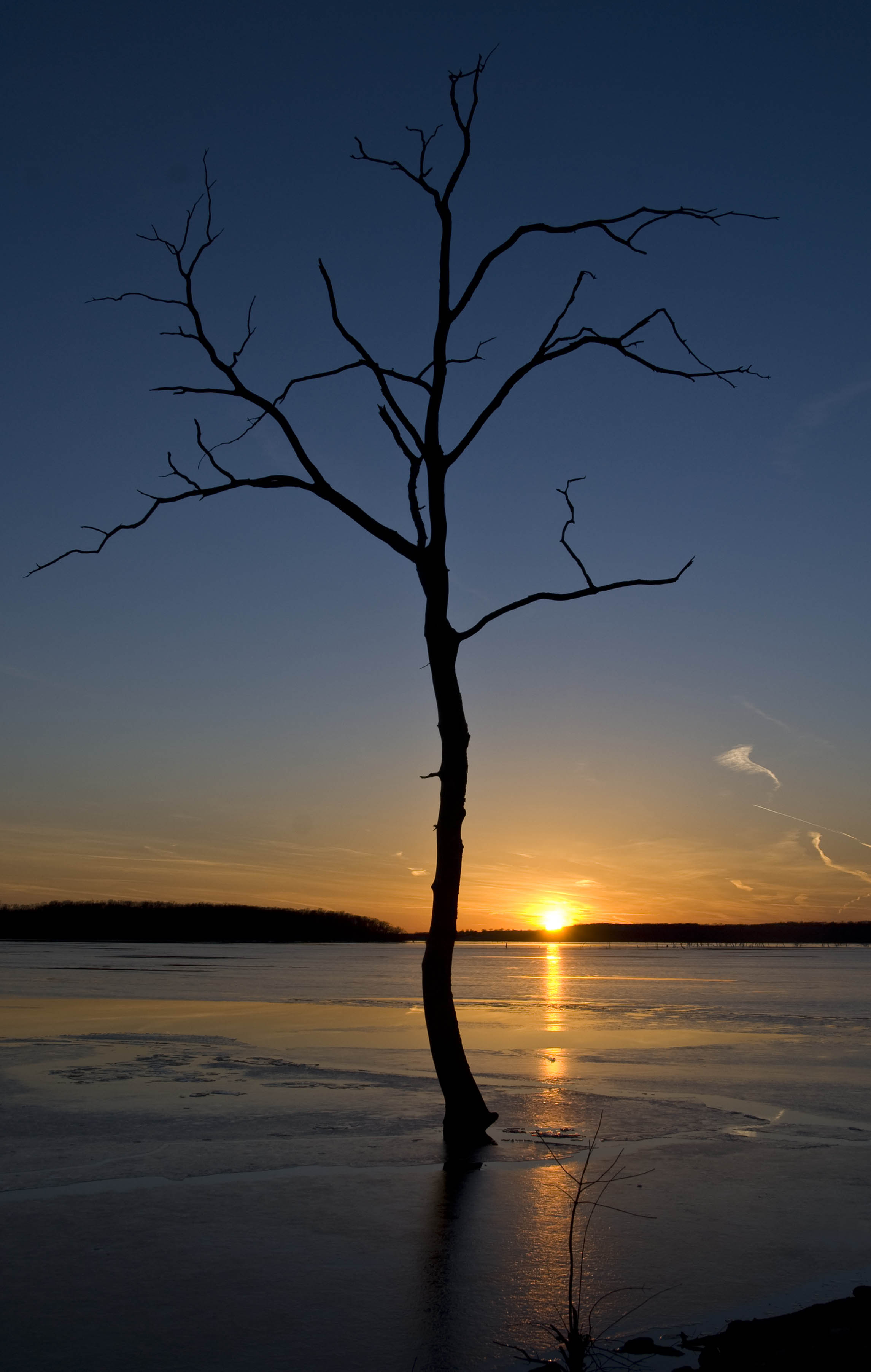 USA lonely tree at sunset low res.jpg