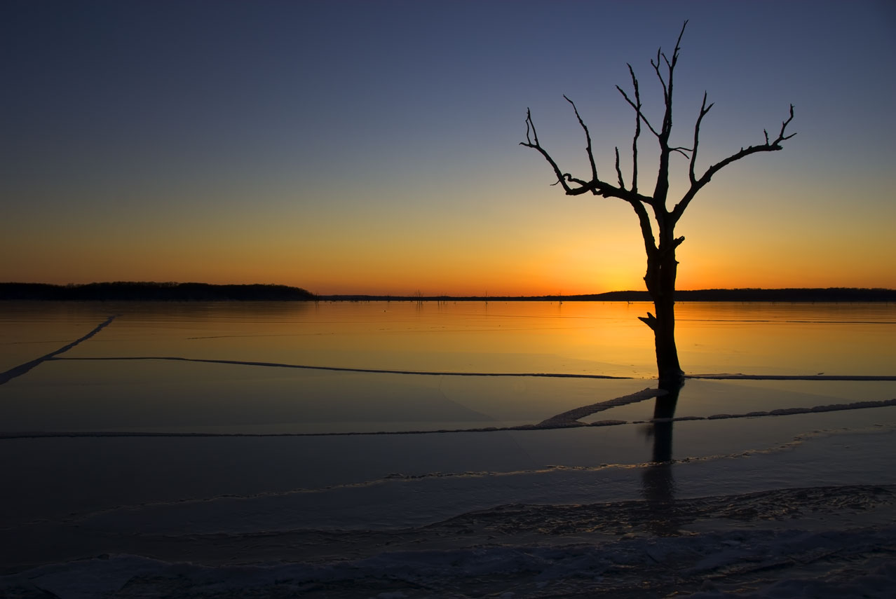 USA-Lonely-tree-at-sunset-m.jpg
