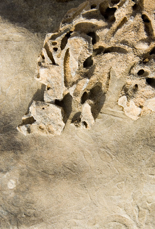 USA-strange-fossil-rock-1.jpg