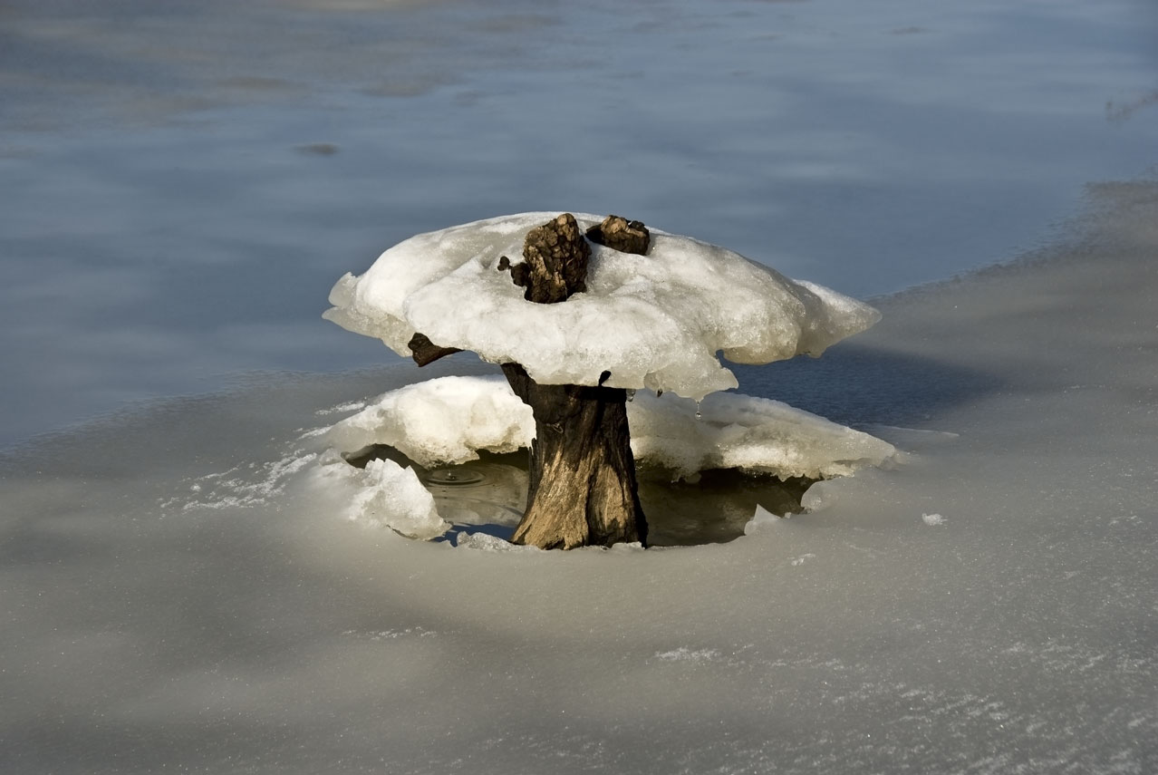 USA-stump-mushroom-with-ice.jpg