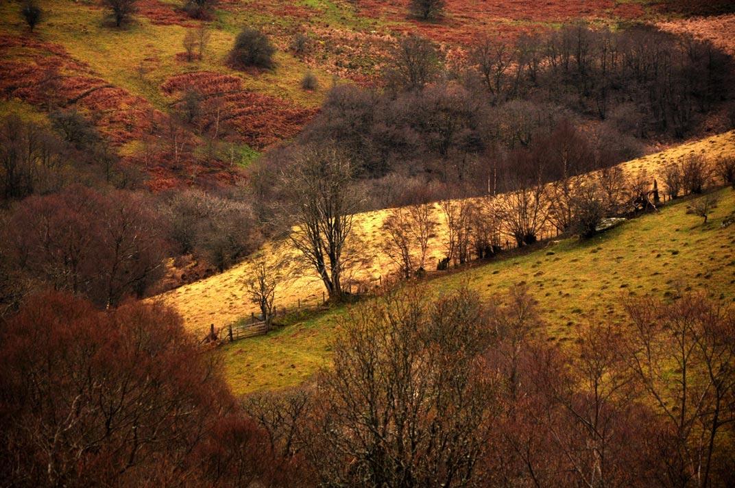Wales-nature-reserve-II.jpg