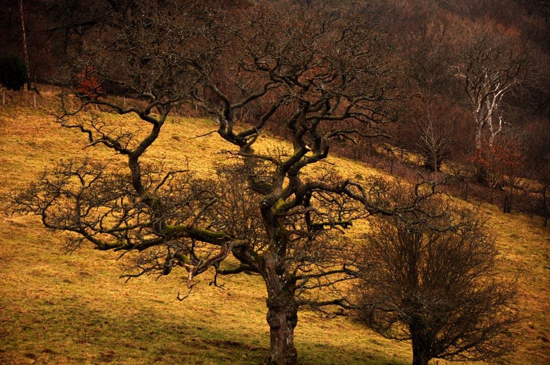 Wales-nature-reserve-IV.jpg