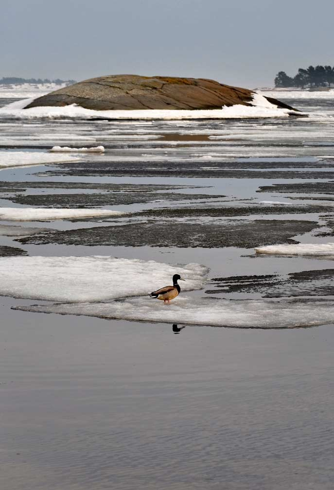 Hanko---ice-is-breaking-III.jpg