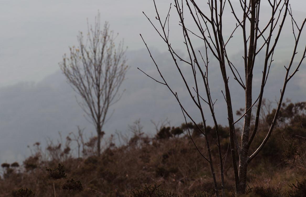 Wales-springtime-in-Rhayader-14.jpg
