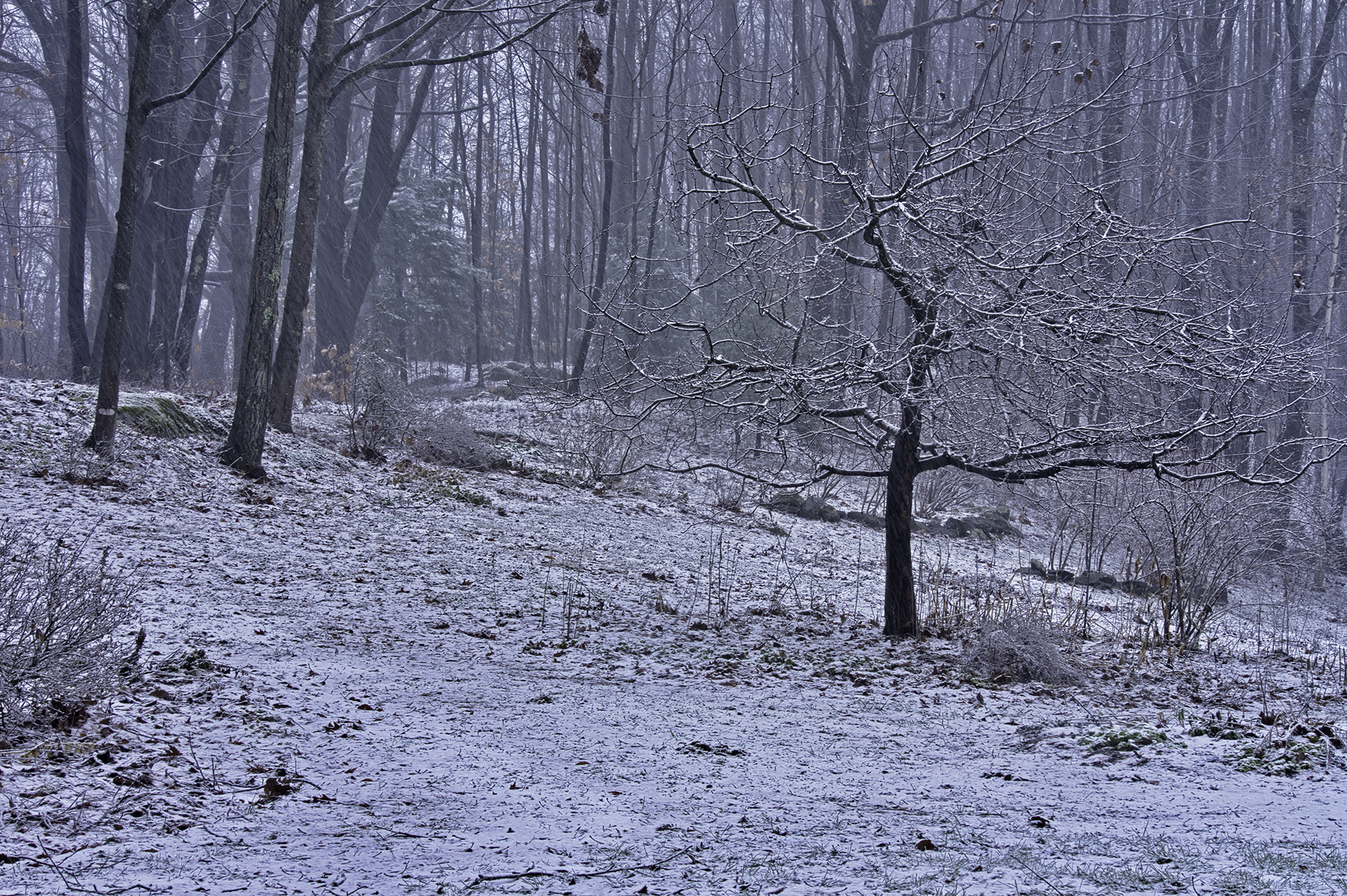 snow12.22.18.jpg