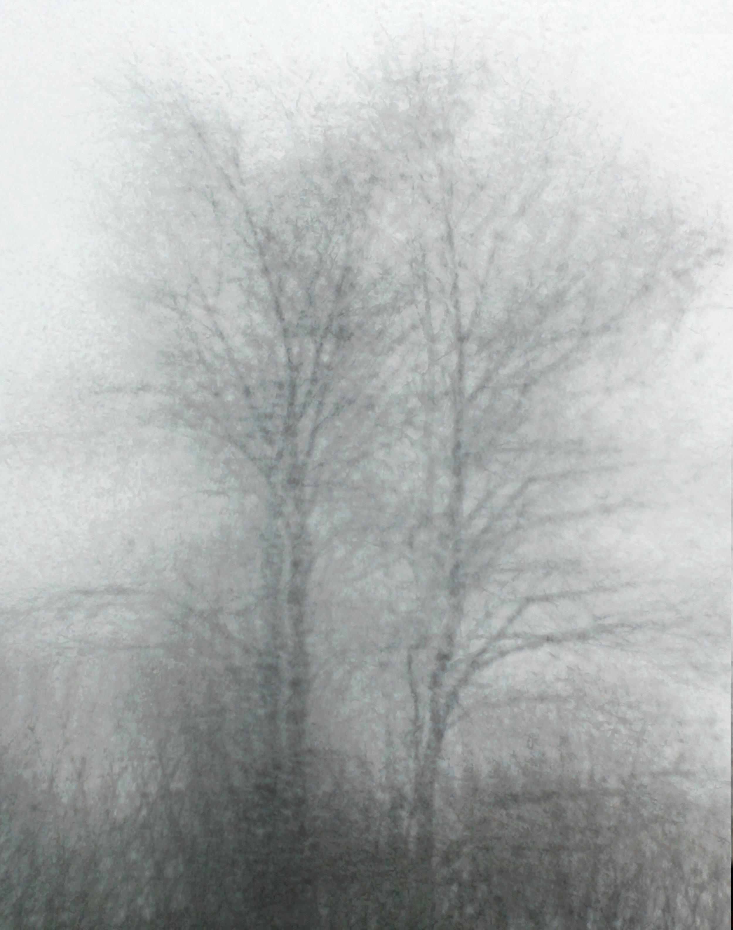 trees-rain.jpg