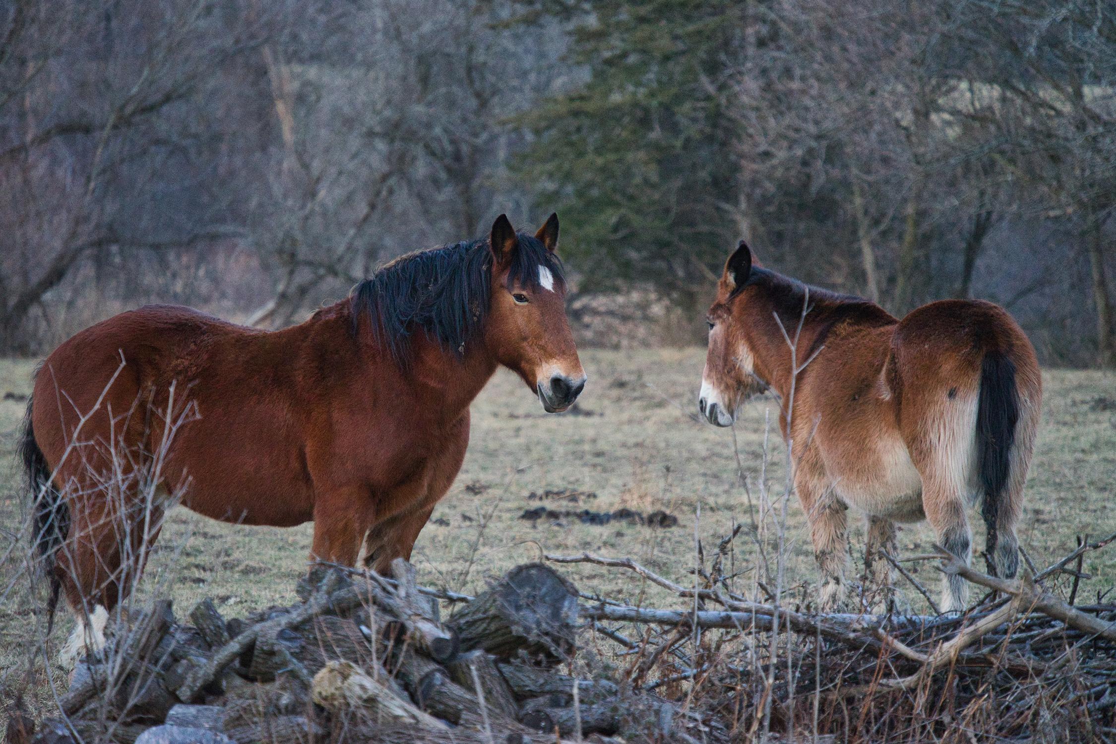 horses-web.jpg