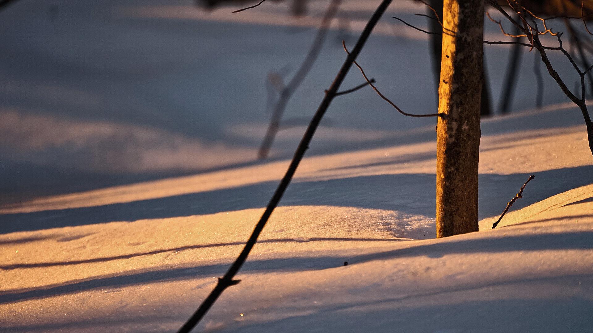 shadows-2.jpg