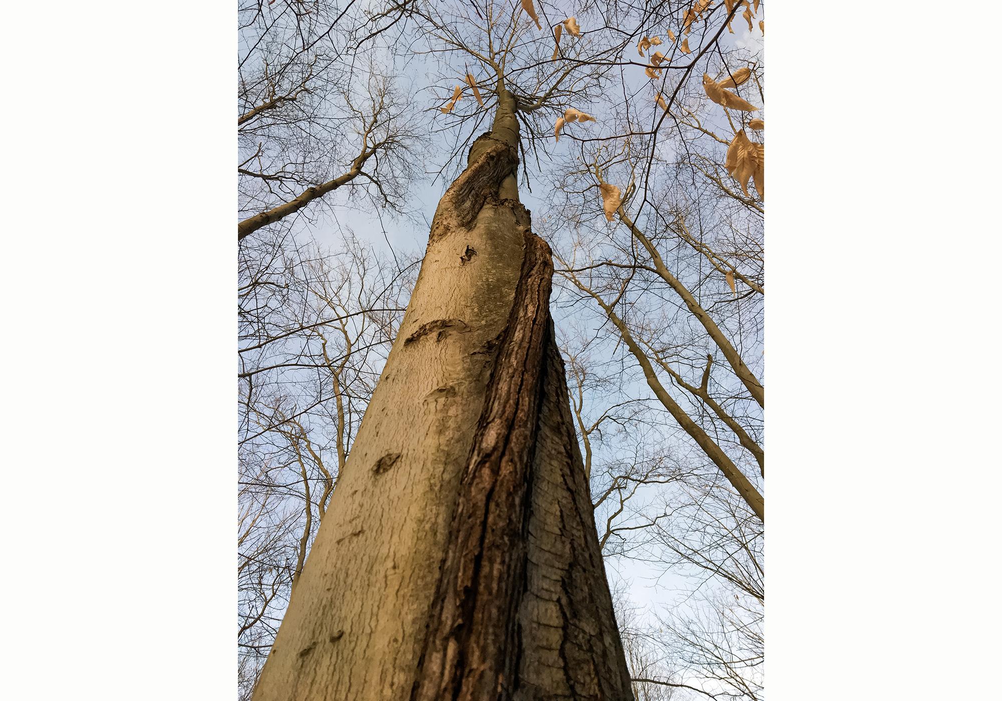 spiraltree-w.jpg