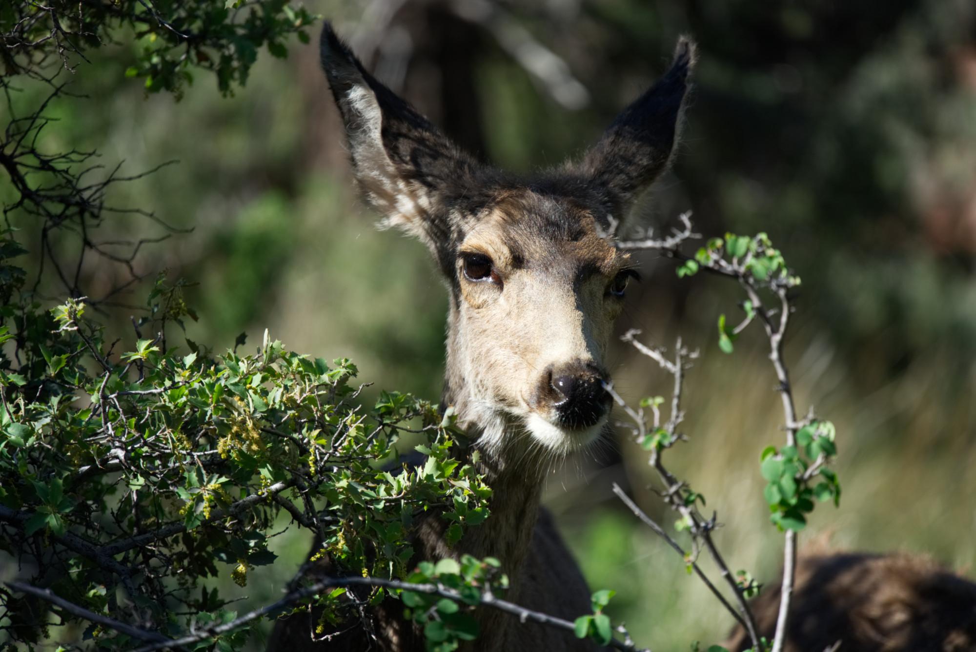 deer-headon-s-web.jpg