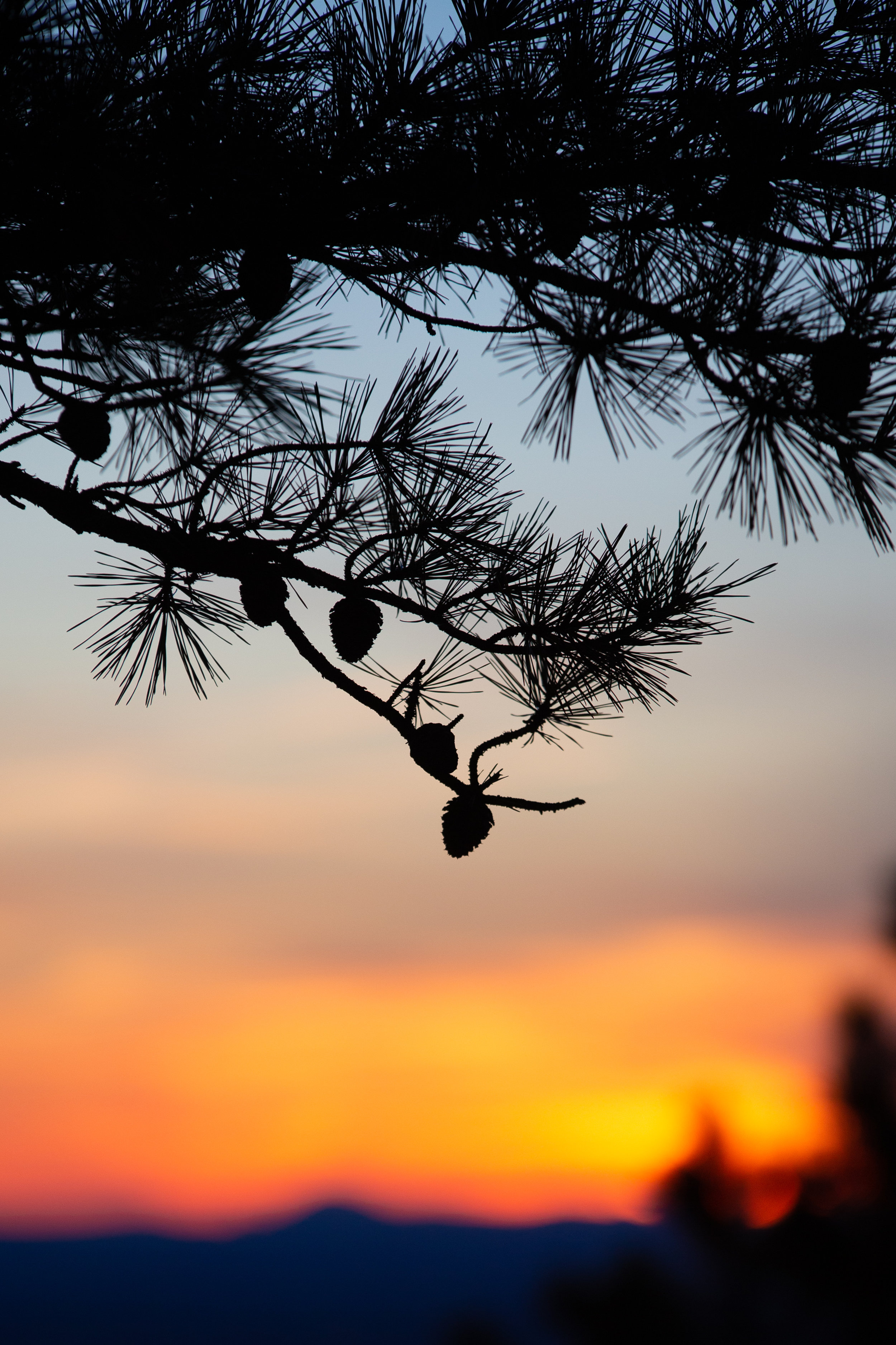 Shenandoah-National-Park-blue-ridge-parkway-day-mountains-afternoon-haze-layers-distance-texture-trees-fall-sunset-evening-silhouette-pinecone