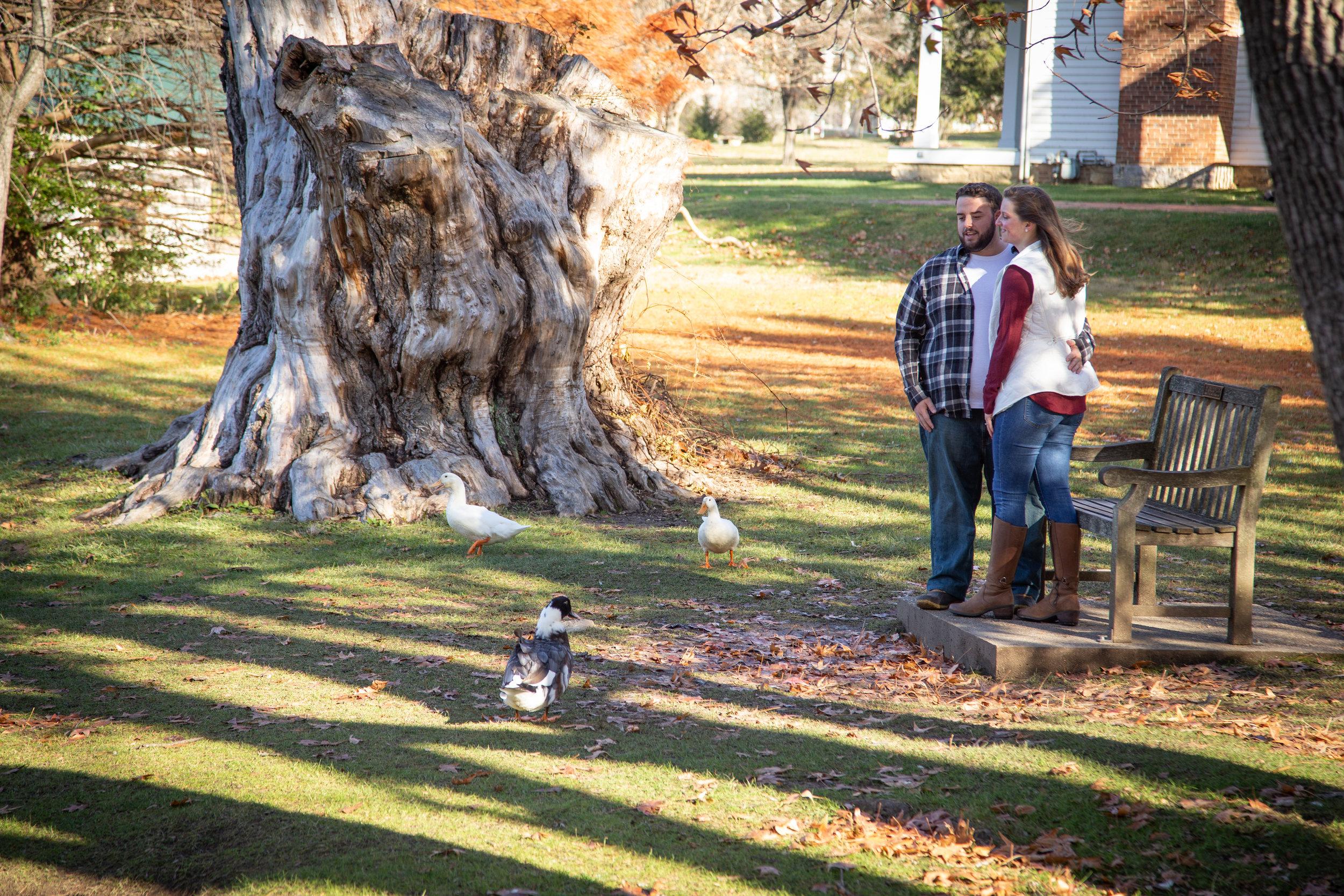 Fall-Laughing-together-bench-trees-duck-pond-virginia-tech-blacksburg-roanoke-engaged-warm-ducks-swarm