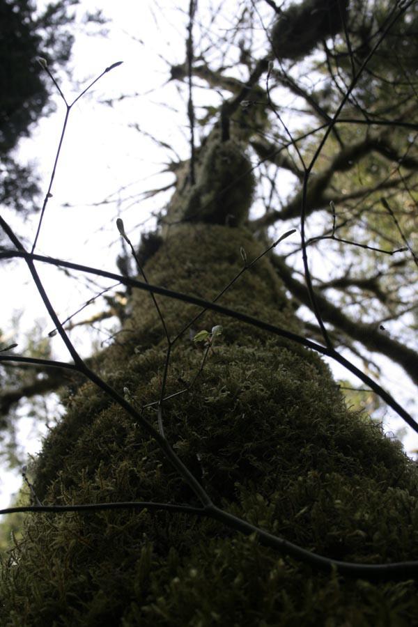 treeview.jpg
