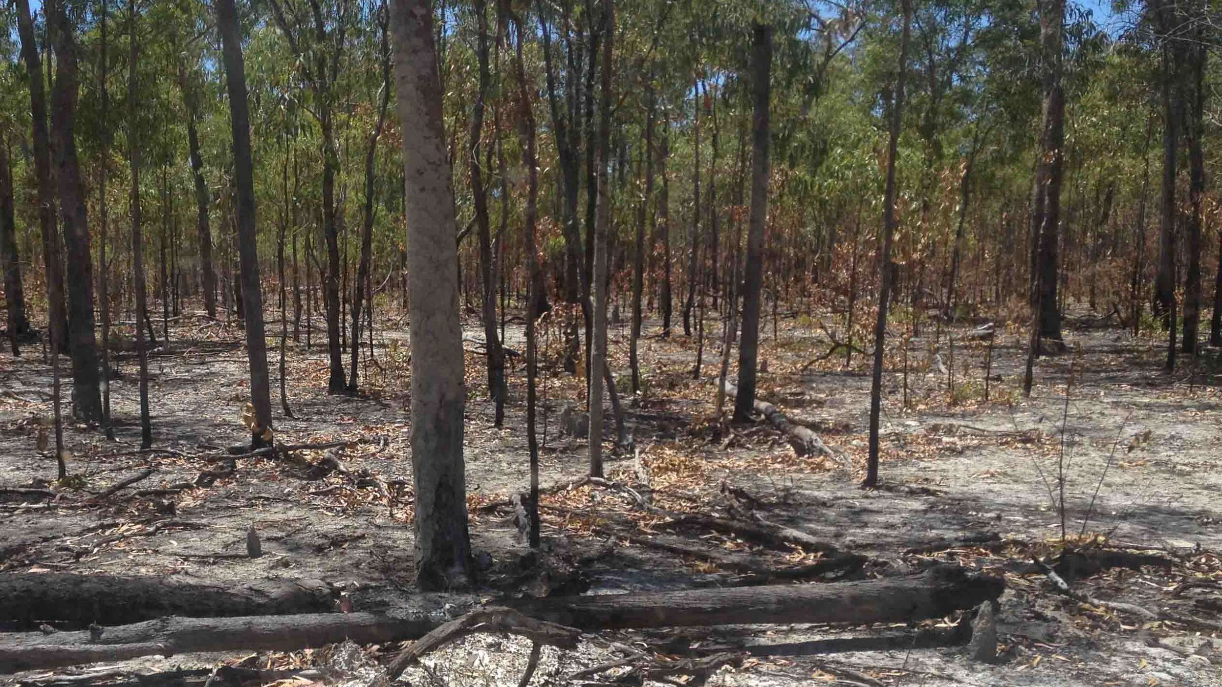 Cool season burns in Cape York: is this a legitimate carbon offset?
